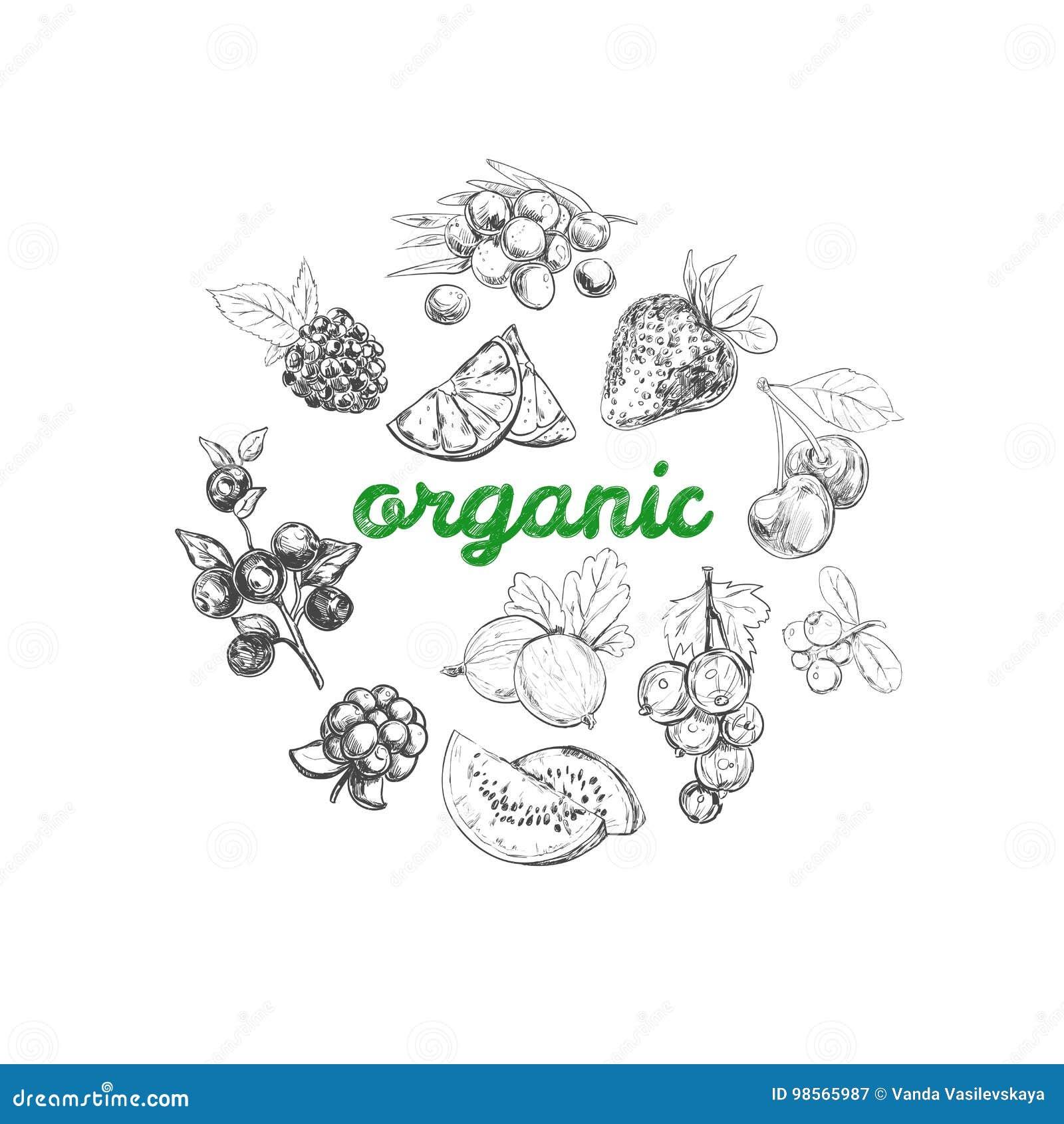 Collage av nya grönsaker Tecknad illustration för vektor hand Olika typer av bär