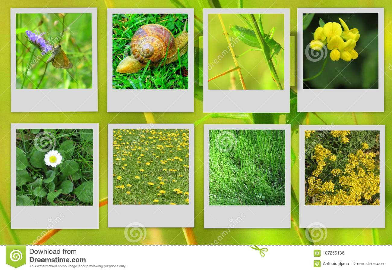 Beautiful pictures of flowers and animals stock photo image of beautiful pictures of flowers and animals royalty free stock photo izmirmasajfo