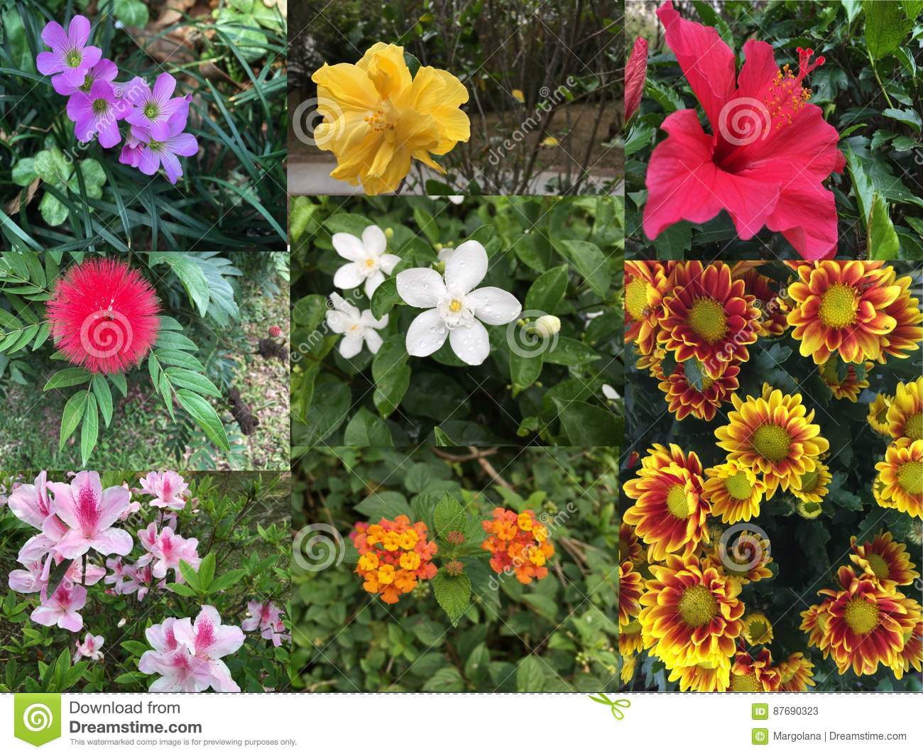 Collage Of Beautiful Variety Of Colorful Flowers And Plants Stock