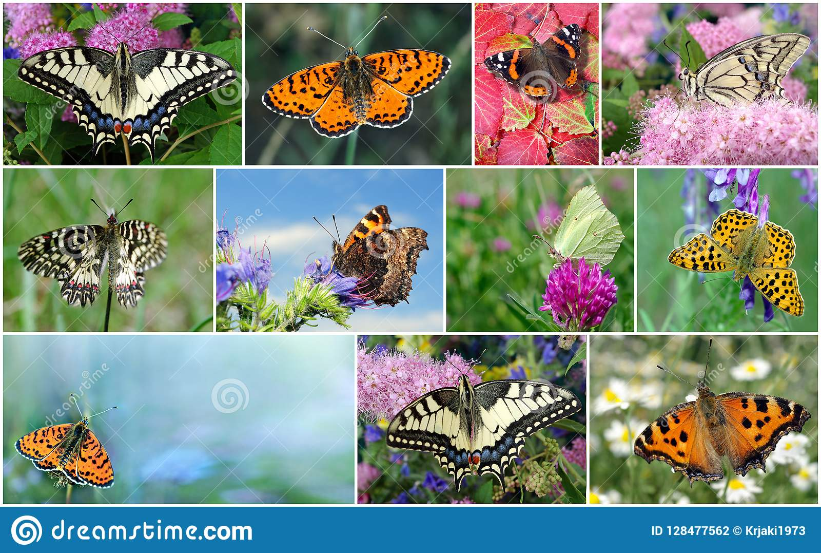 Collage Of Bright Colorful Butterflies Stock Photo Image Of