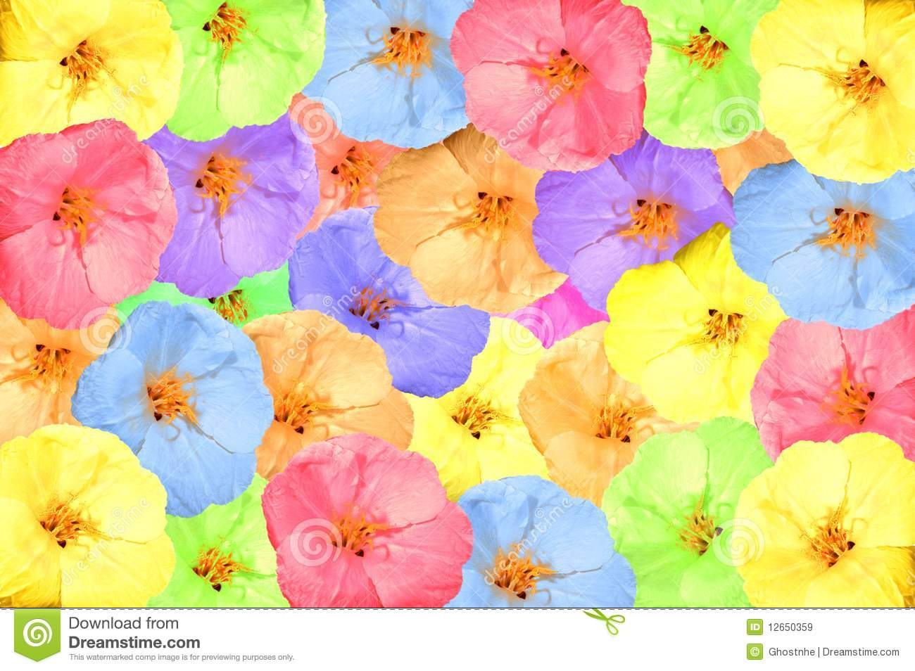 Collage Of Bright Spring Flowers Stock Image Image Of Fresh Merry