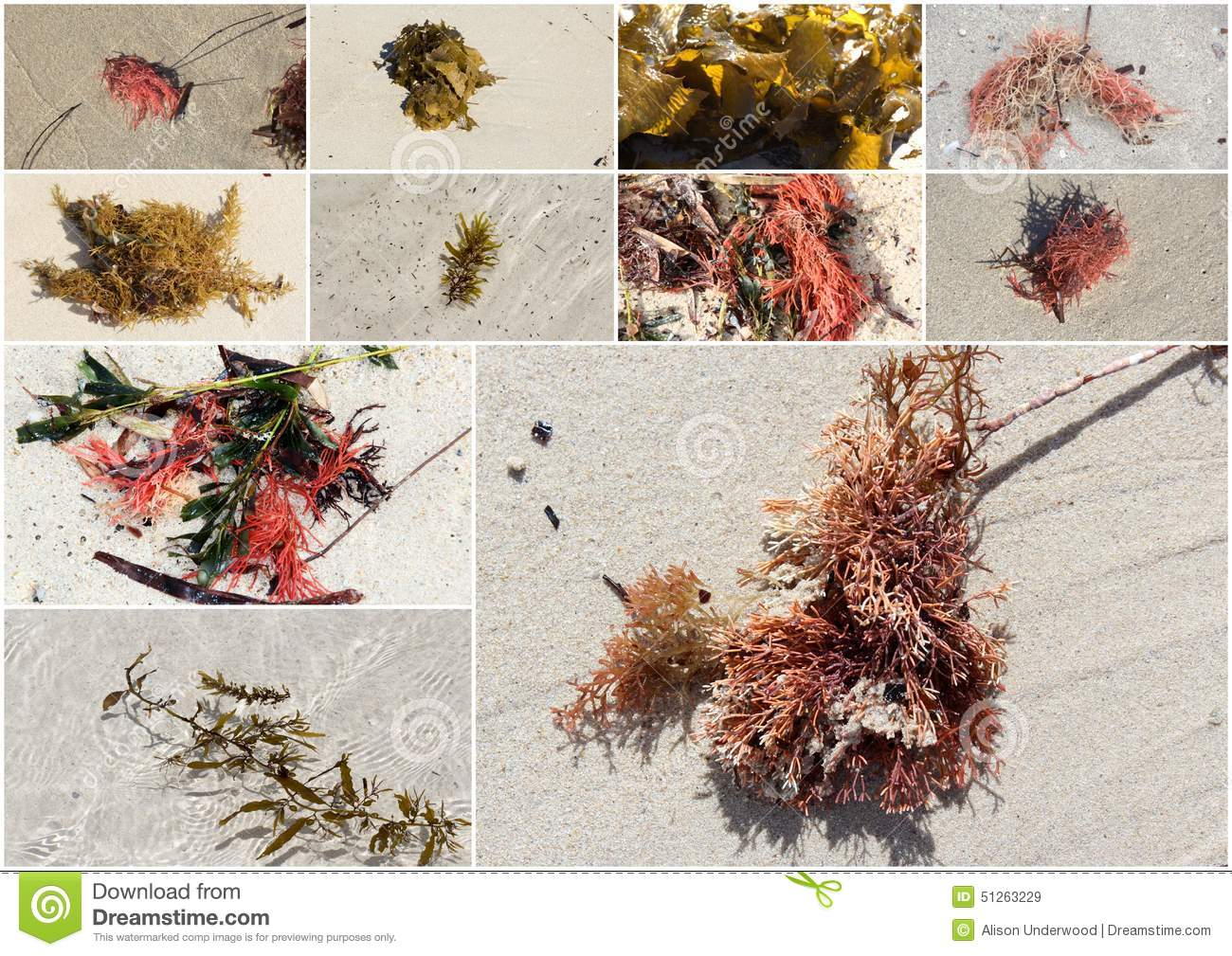 Collage Of Colorful Seaweed Kelp Washed Up On Hutt's Beach