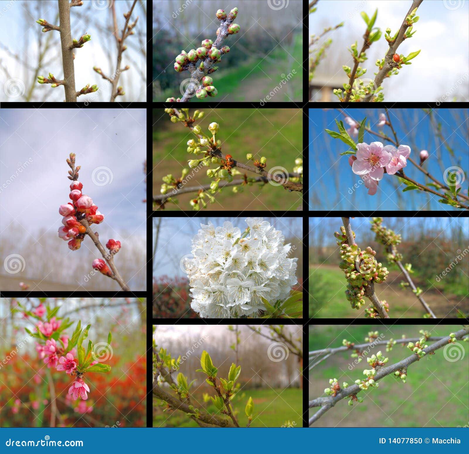 Collage con los árboles frutales