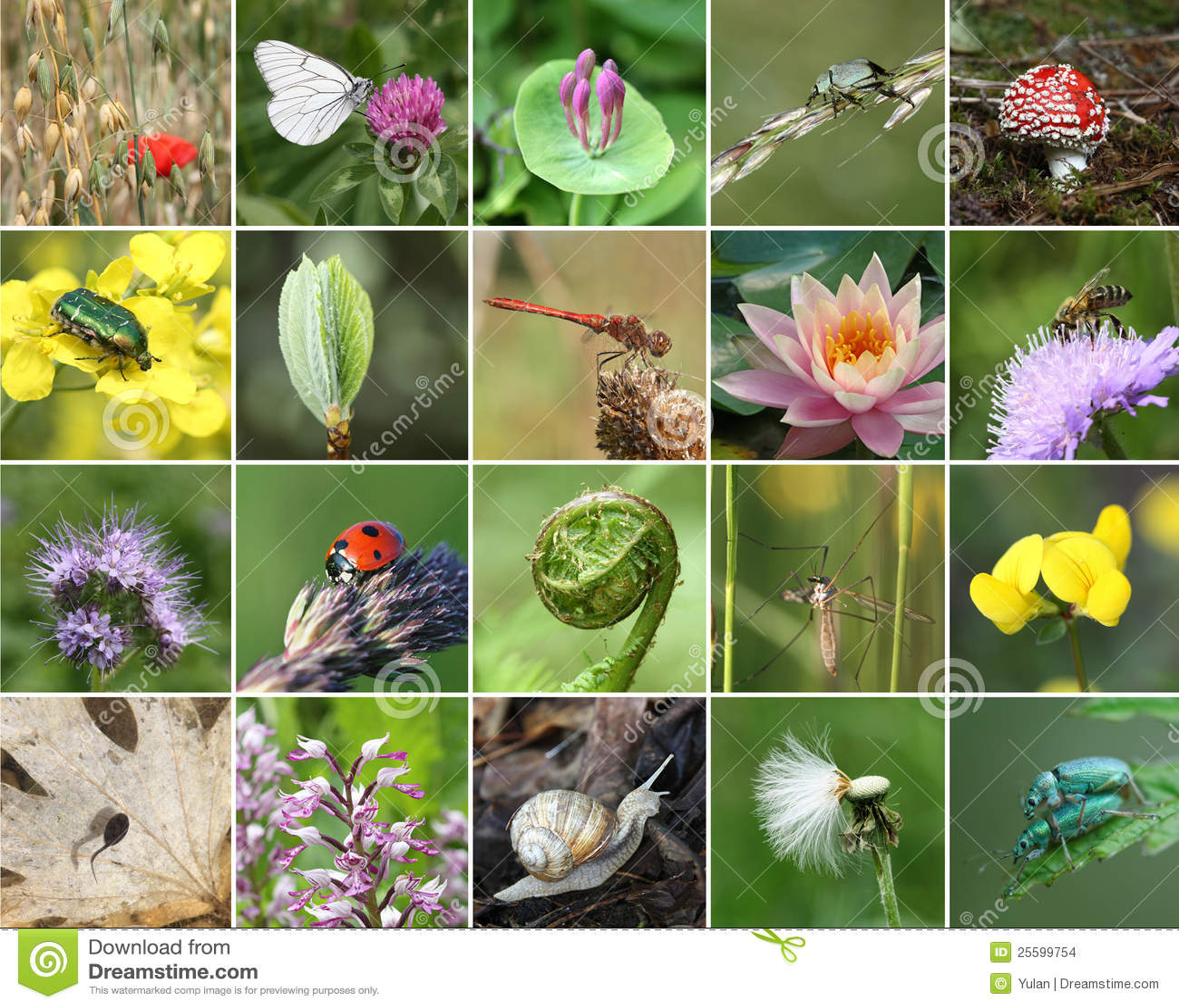 Collage de la biodiversidad foto de archivo imagen de for Que son plantas ornamentales ejemplos
