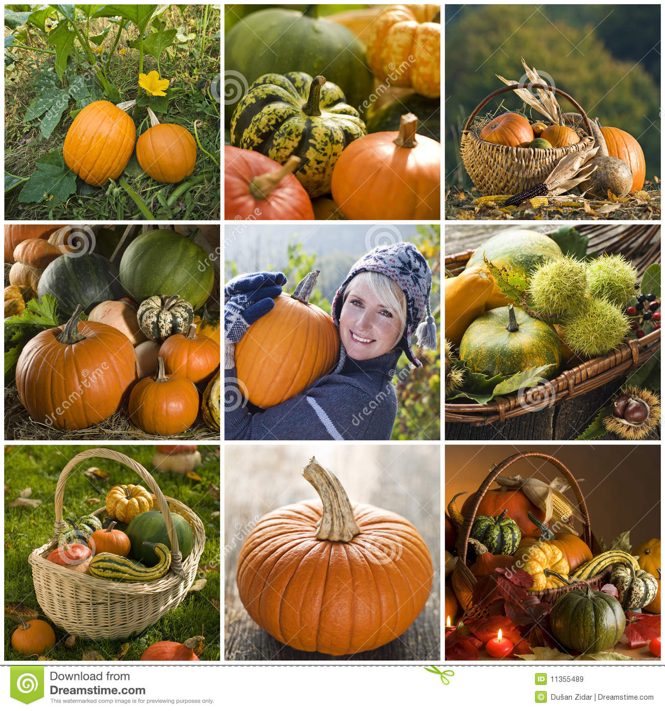 Collage de la calabaza