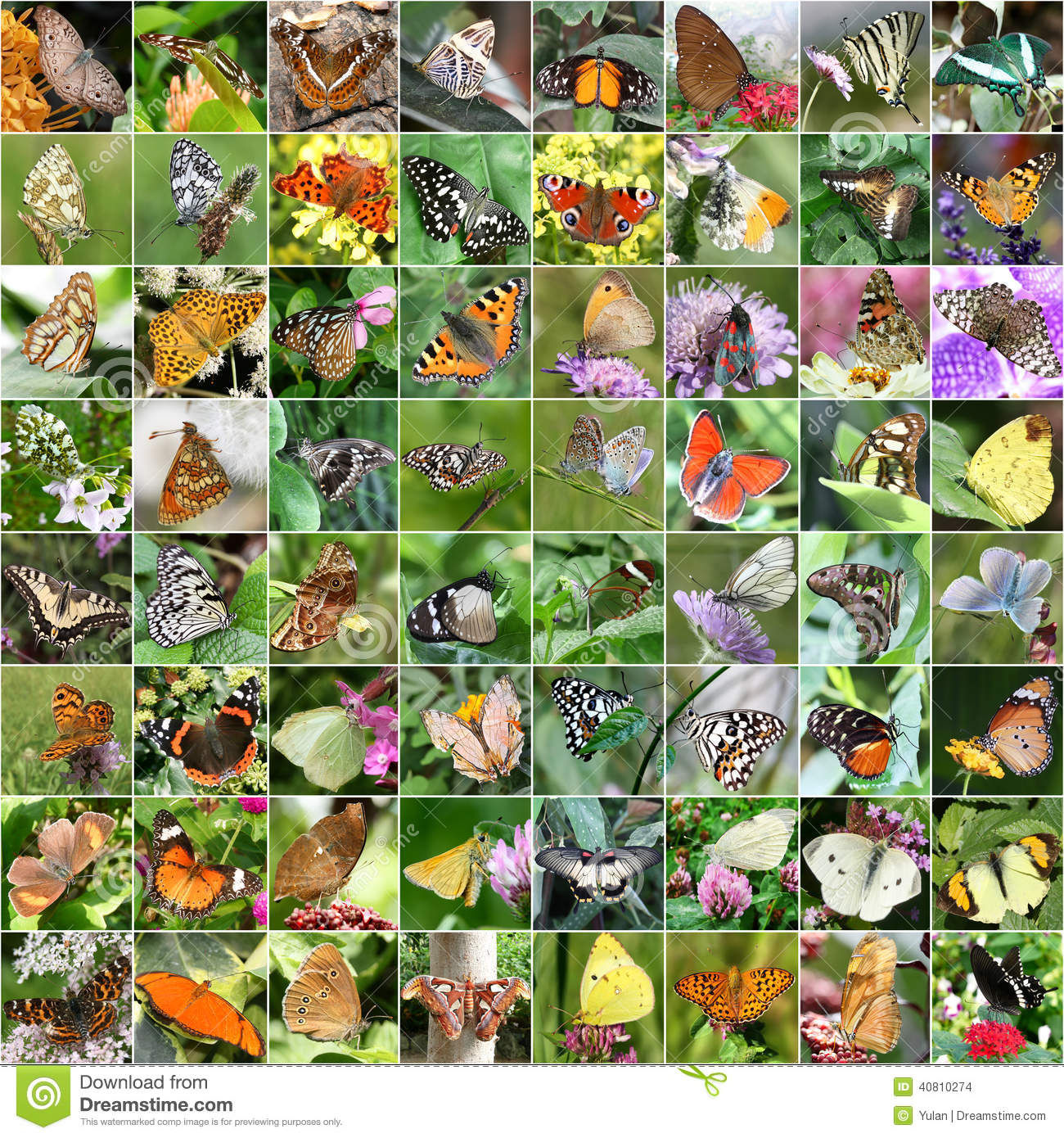 Plants In The Tropical Rainforest Collage Rainforest Animal Coll...
