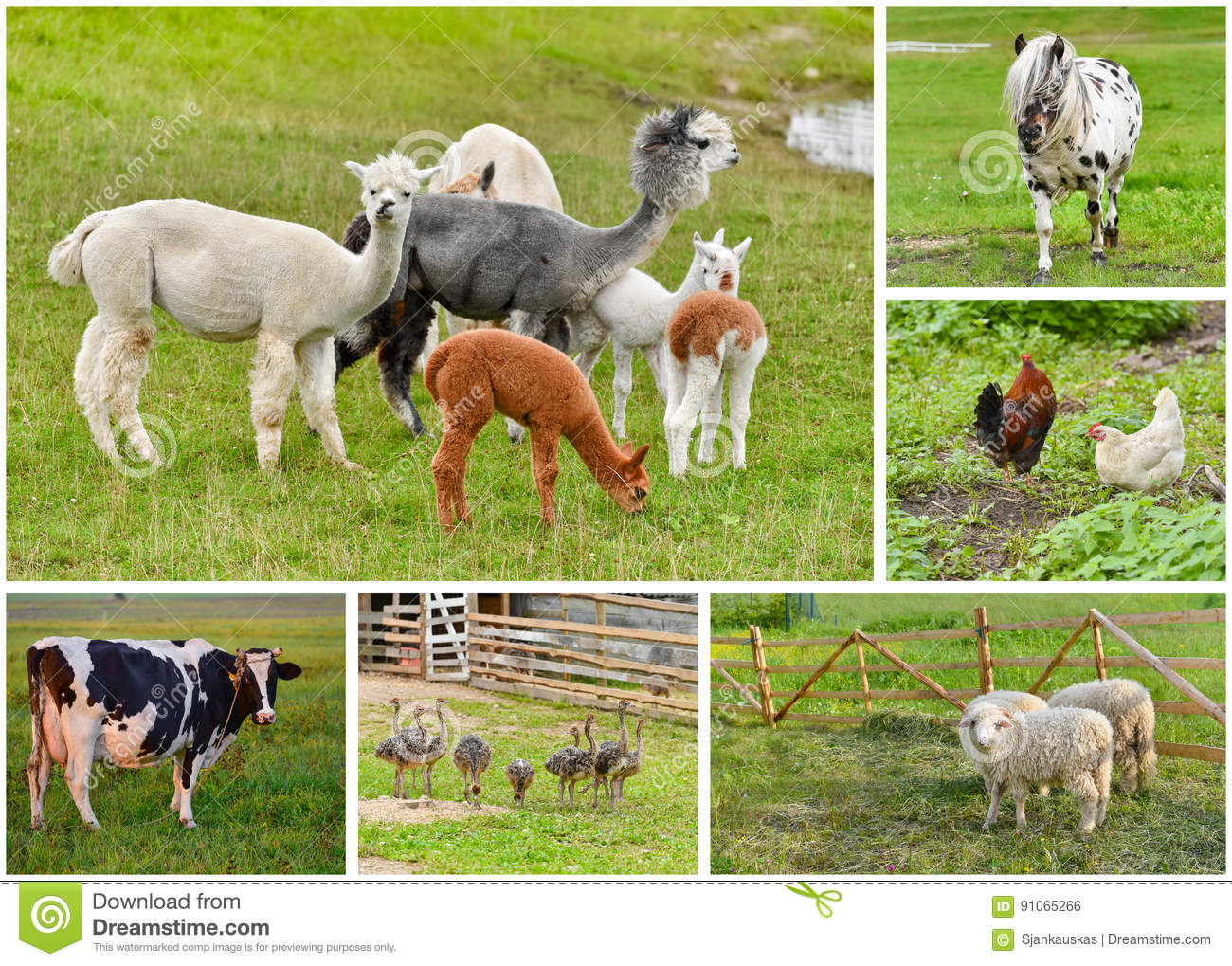 Collage de los animales del campo