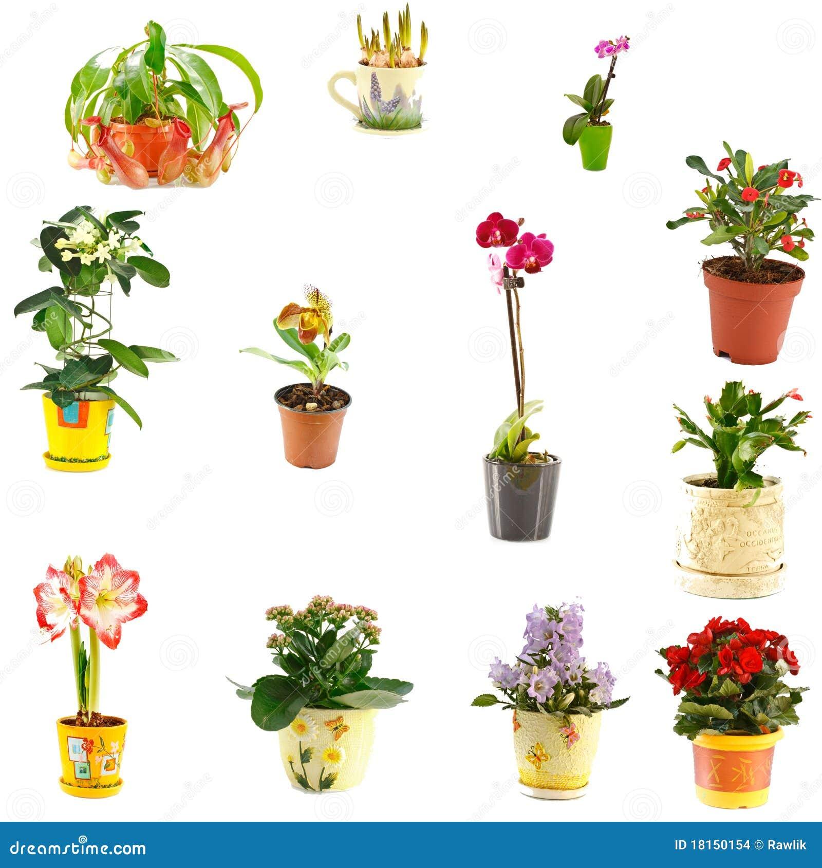 Collage de plantas de interior imagenes de archivo - Variedades de plantas de interior ...