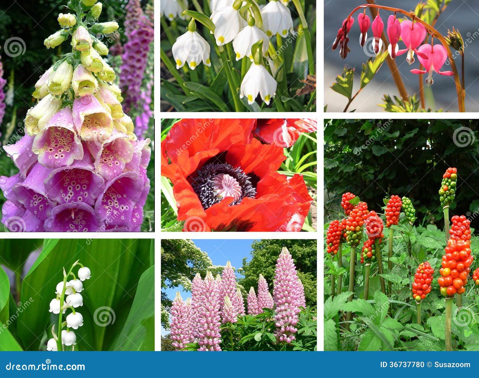 collage de plantas t xicas en el jard n foto de archivo