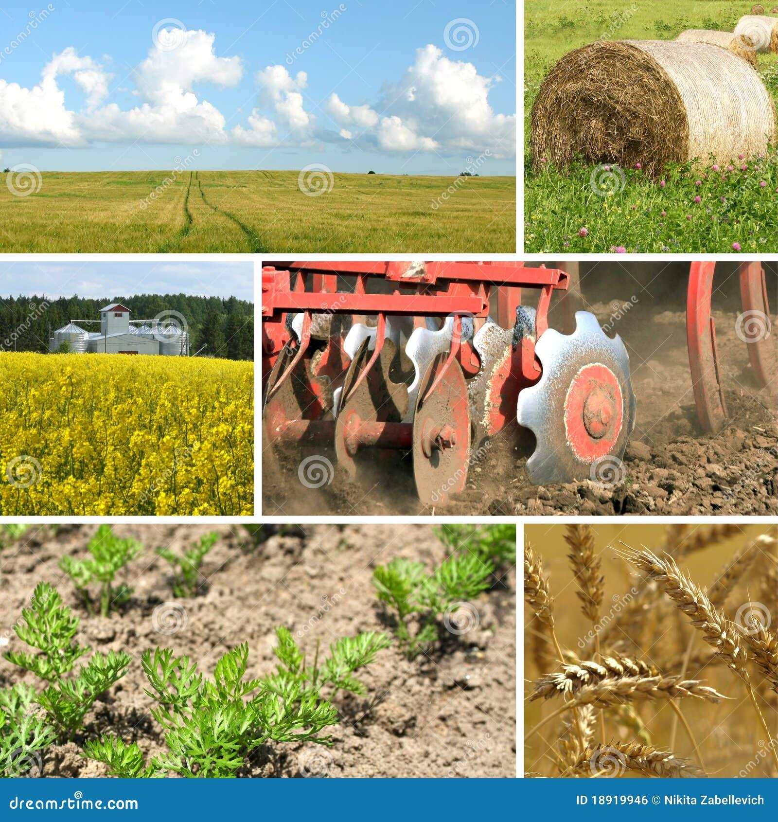Collage di agricoltura