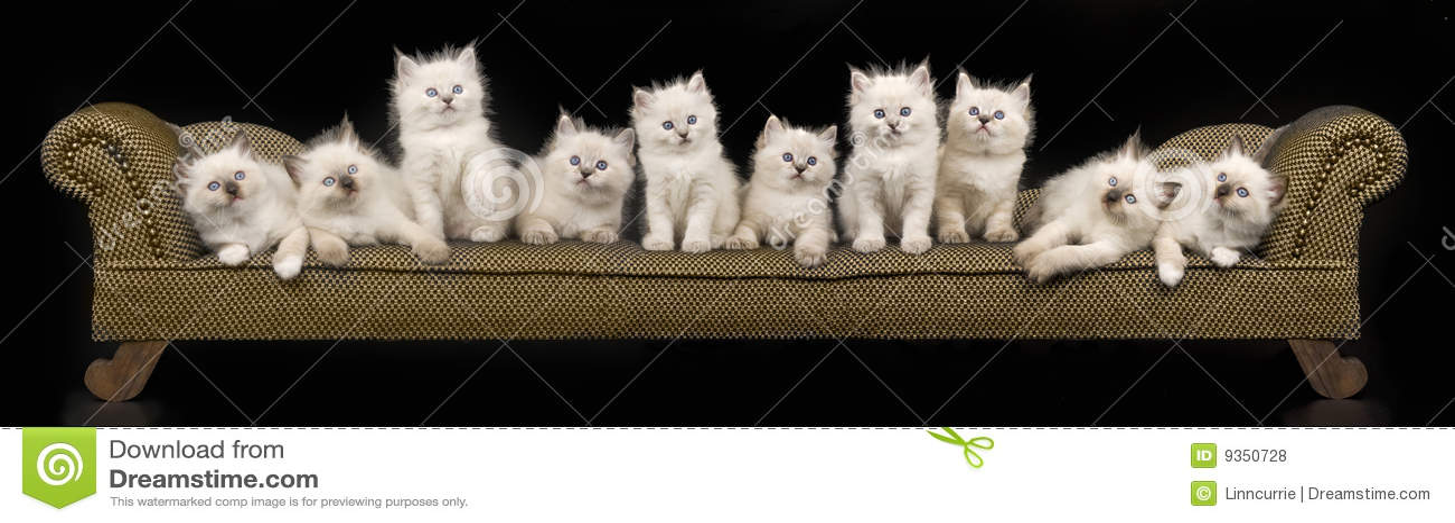 Donald Judd Untitled as well Nicole Ray 著名欧美AV女优排行榜中榜 天天排行网 besides Ragdoll Kitten moreover Bolt Clip Art in addition People In Middle Of Ocean. on 384 html