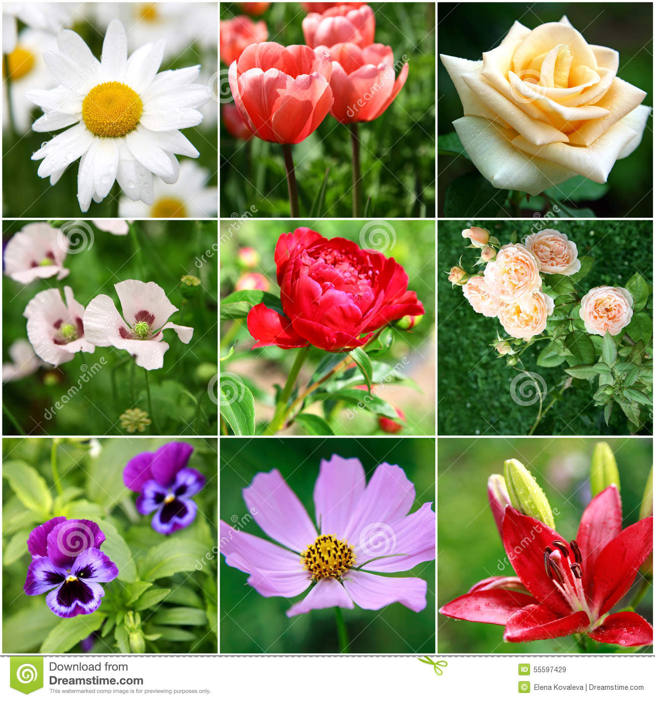 collage of different beautiful flowers stock photo  image, Natural flower
