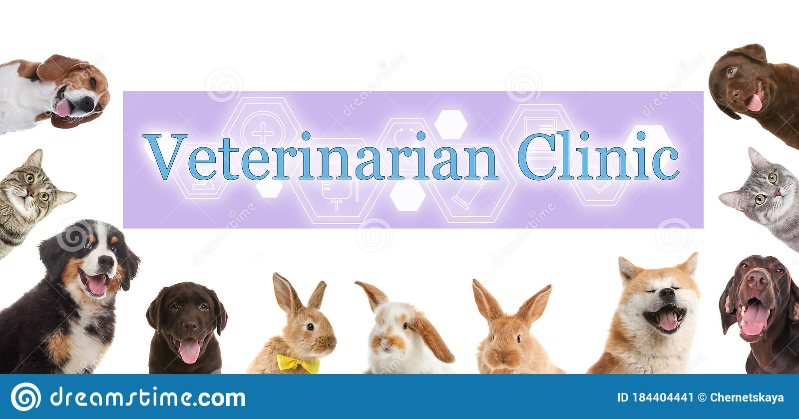 Collage With Cute Pets And Text Veterinarian Clinic On White Background Banner Design Stock Image Image Of Labrador Doctor 184404441