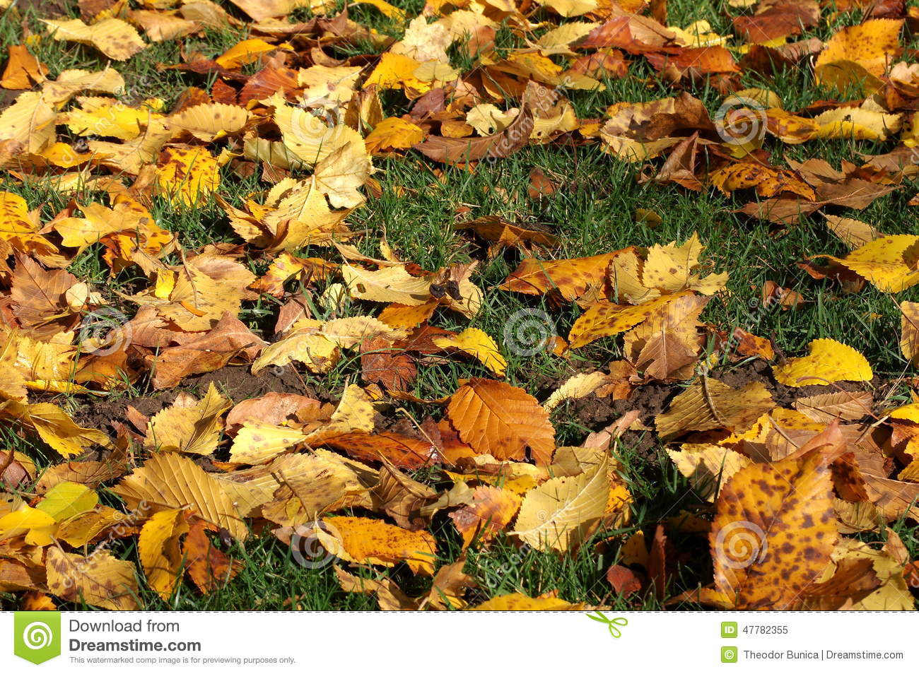 Colors of autumn in a landscape in the park. Collage of colored fallen leaves in the green garss. Autumn background