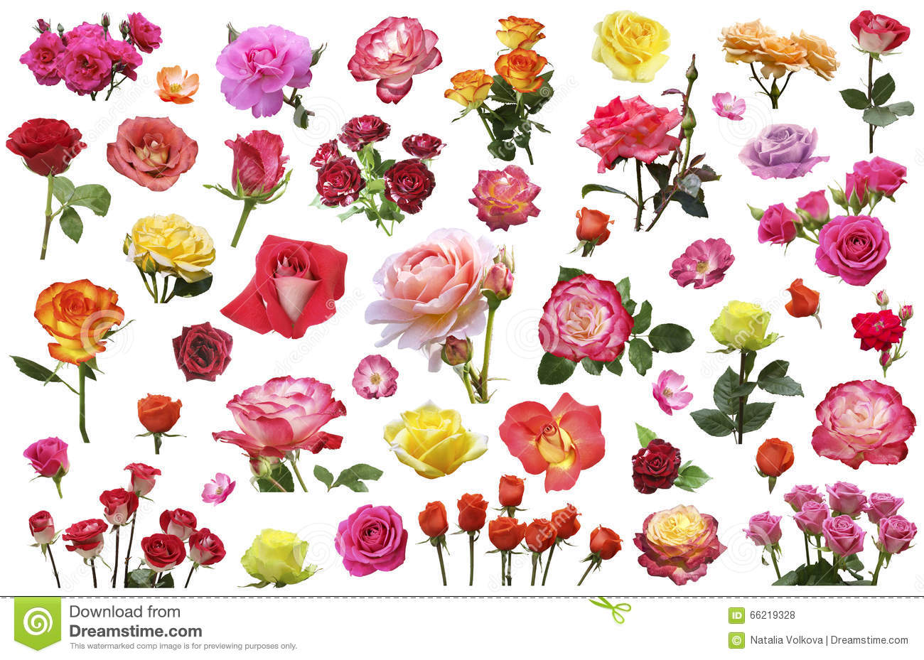A collage of flowers of roses of different colors and - Clase de flores y sus nombres ...