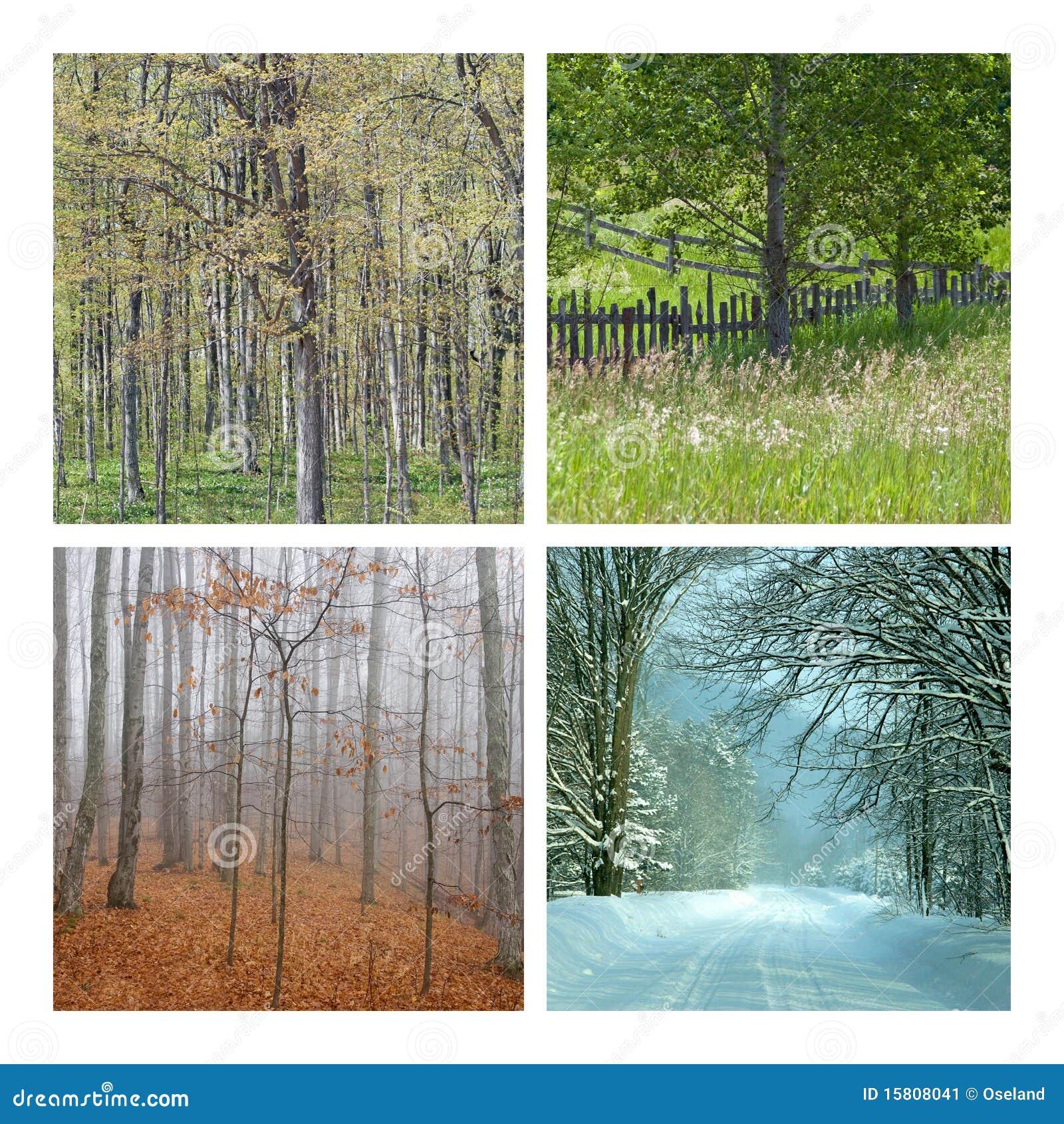 Collage fyra natursäsonger