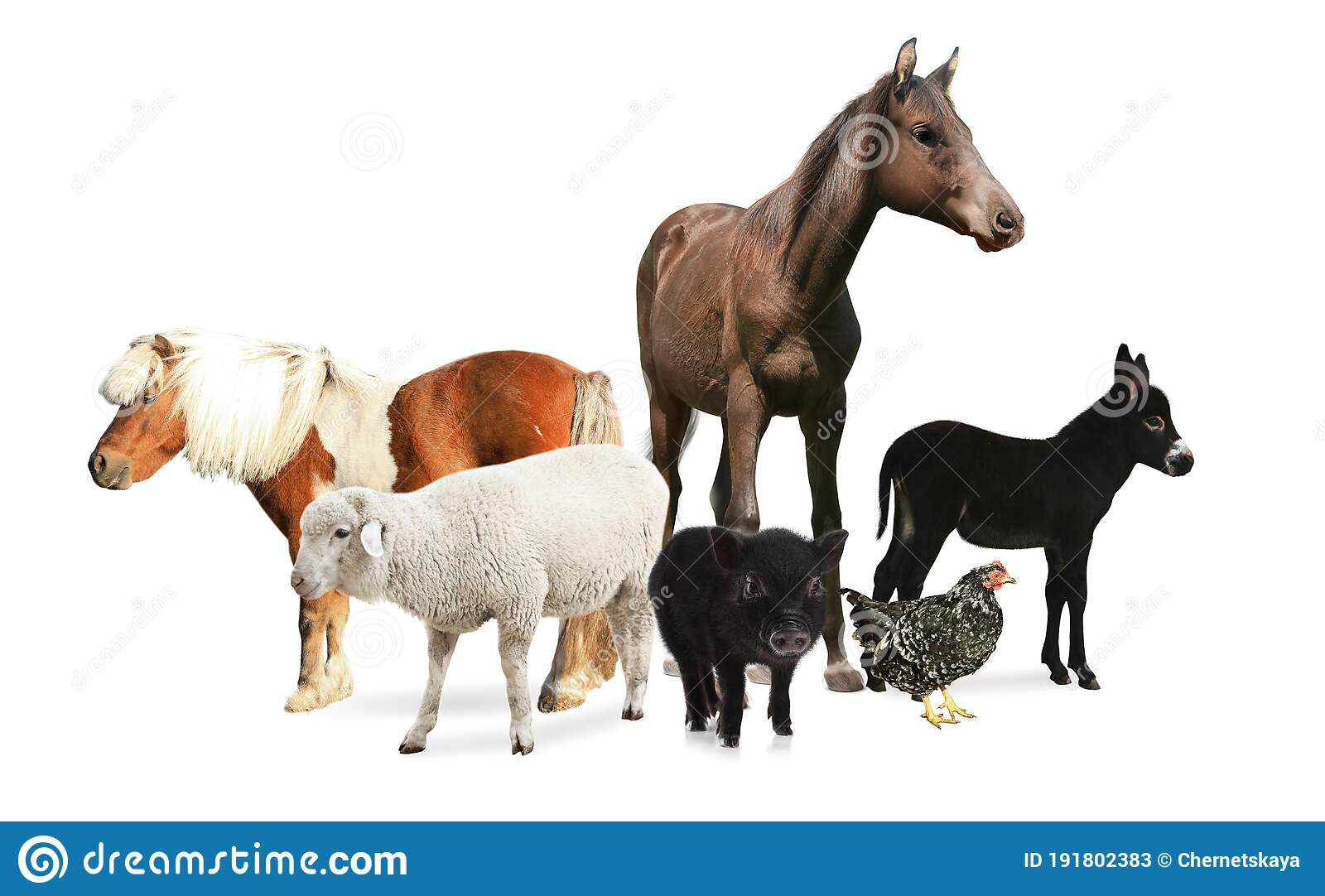 Collage With Horse And Other Pets On Background Banner Design Stock Image Image Of Purebred Pets 191802383