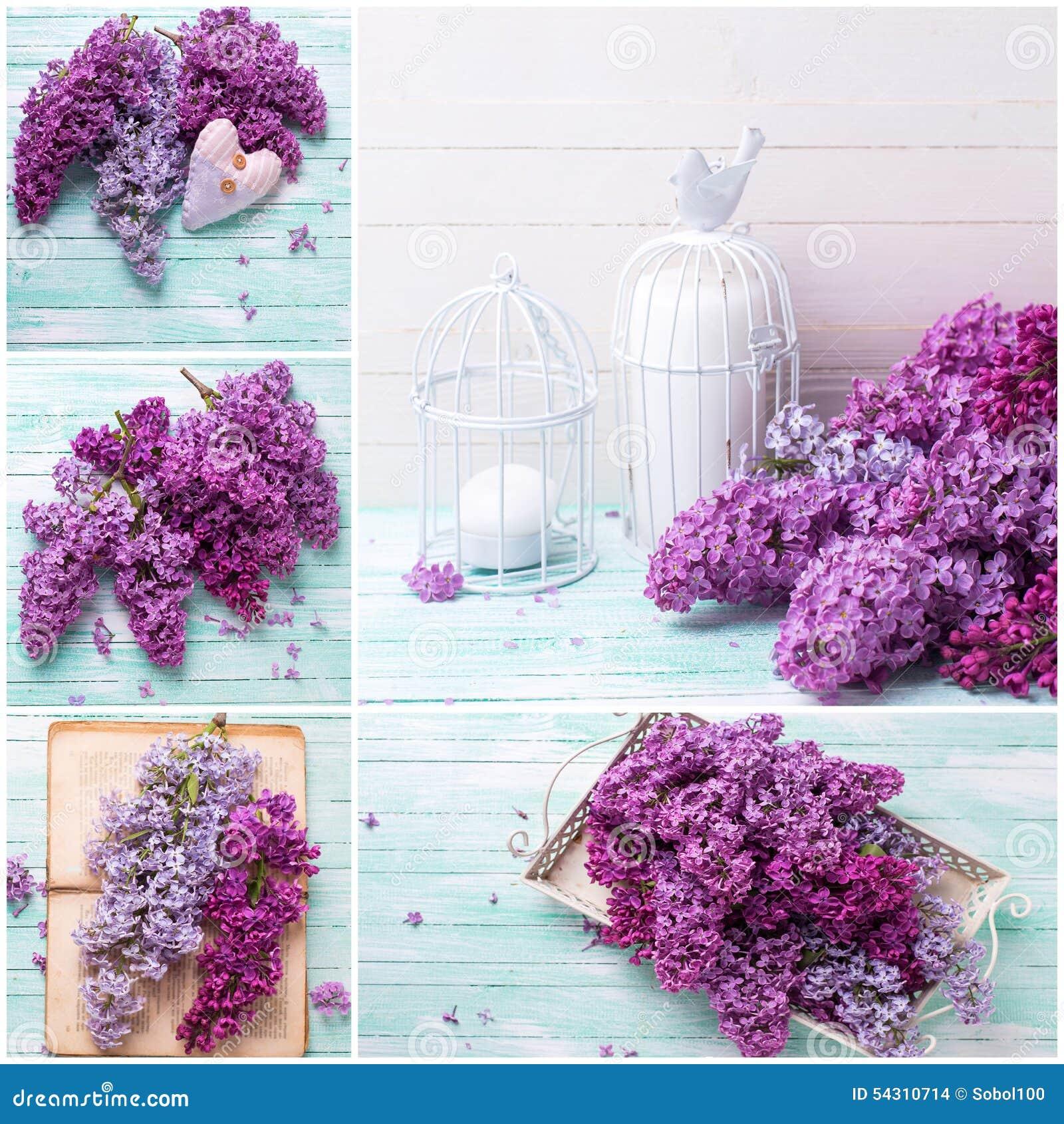 Collage med lilan blommar på träbakgrund