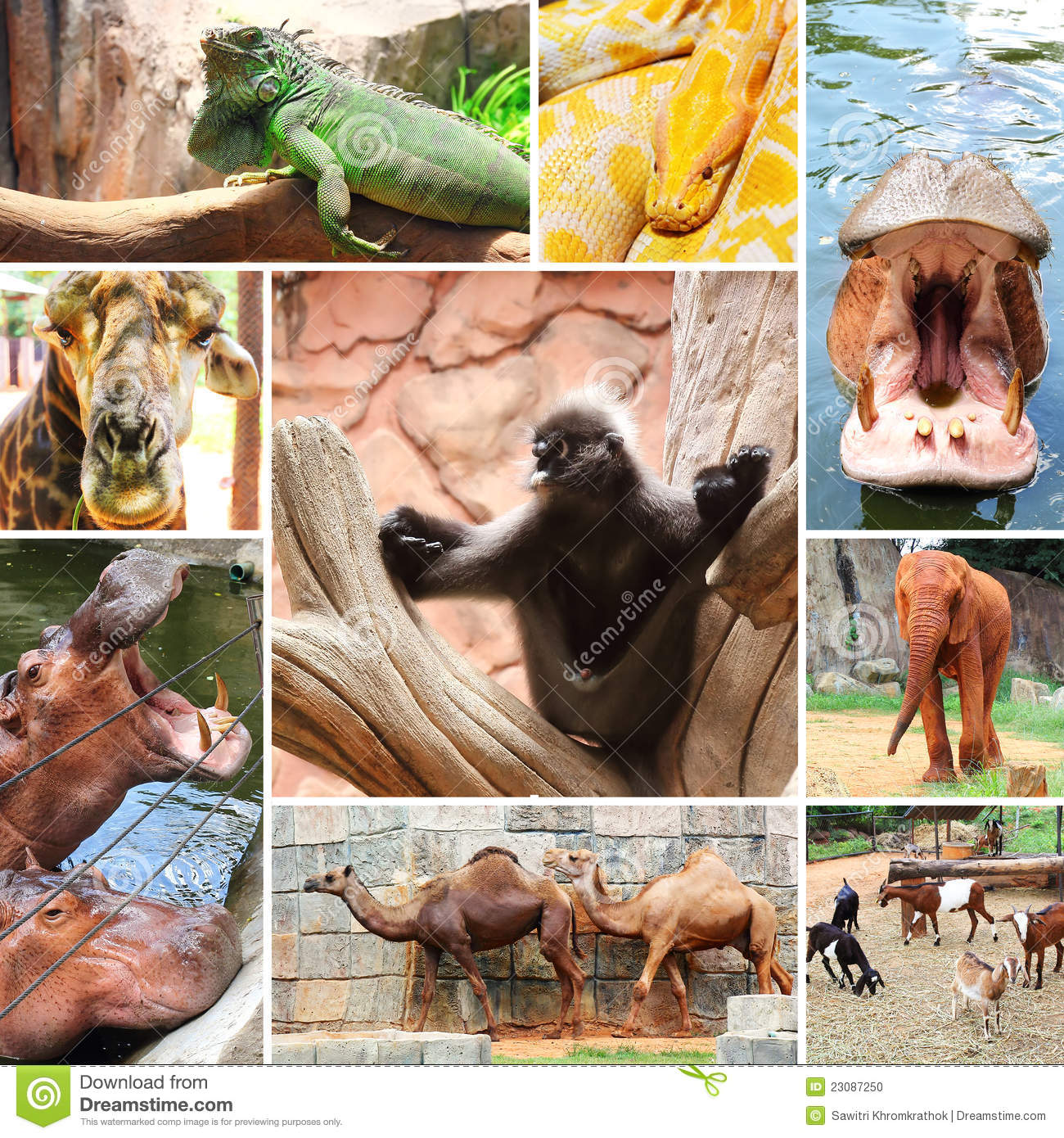 Wild Animals Collage Royalty Free Stock Photo