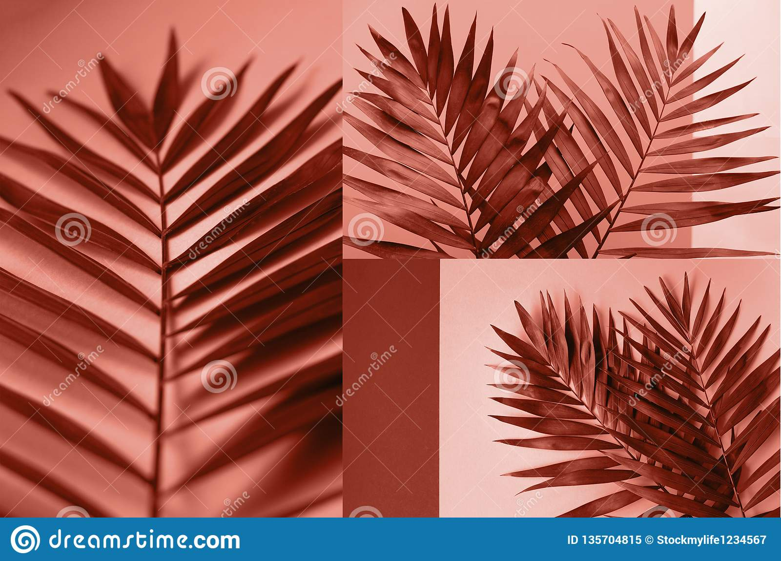 A collage of photos of coral color with palm branches