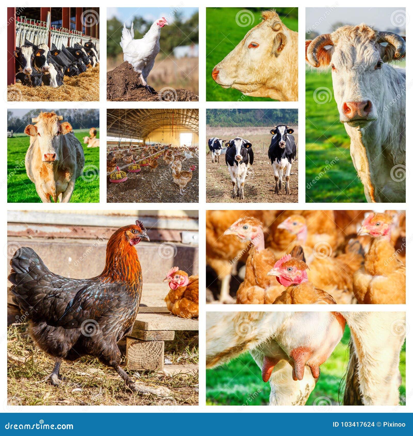 Collage que representa varios animales del campo