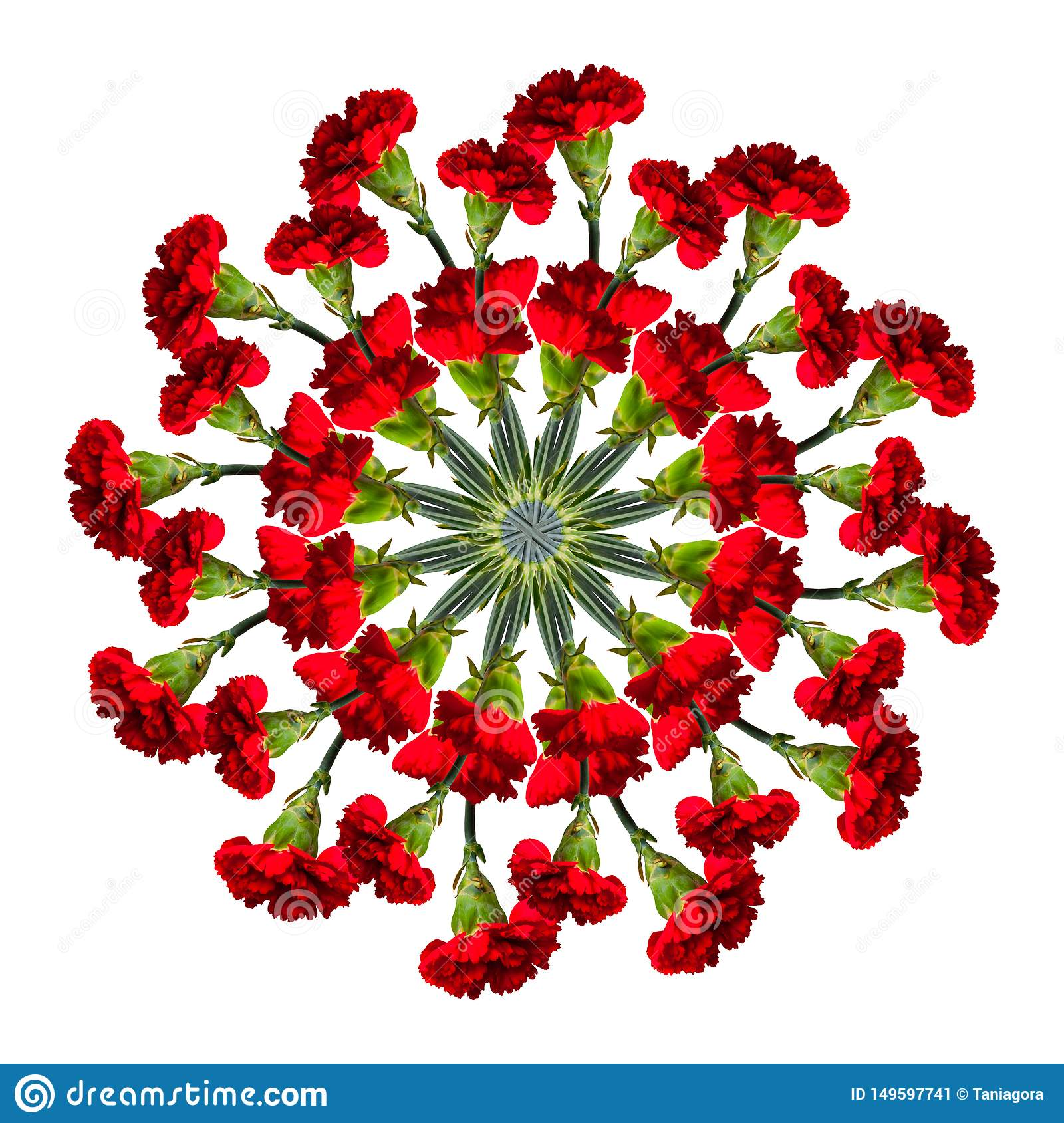 Collage of red beautiful carnation flowers on a white background.