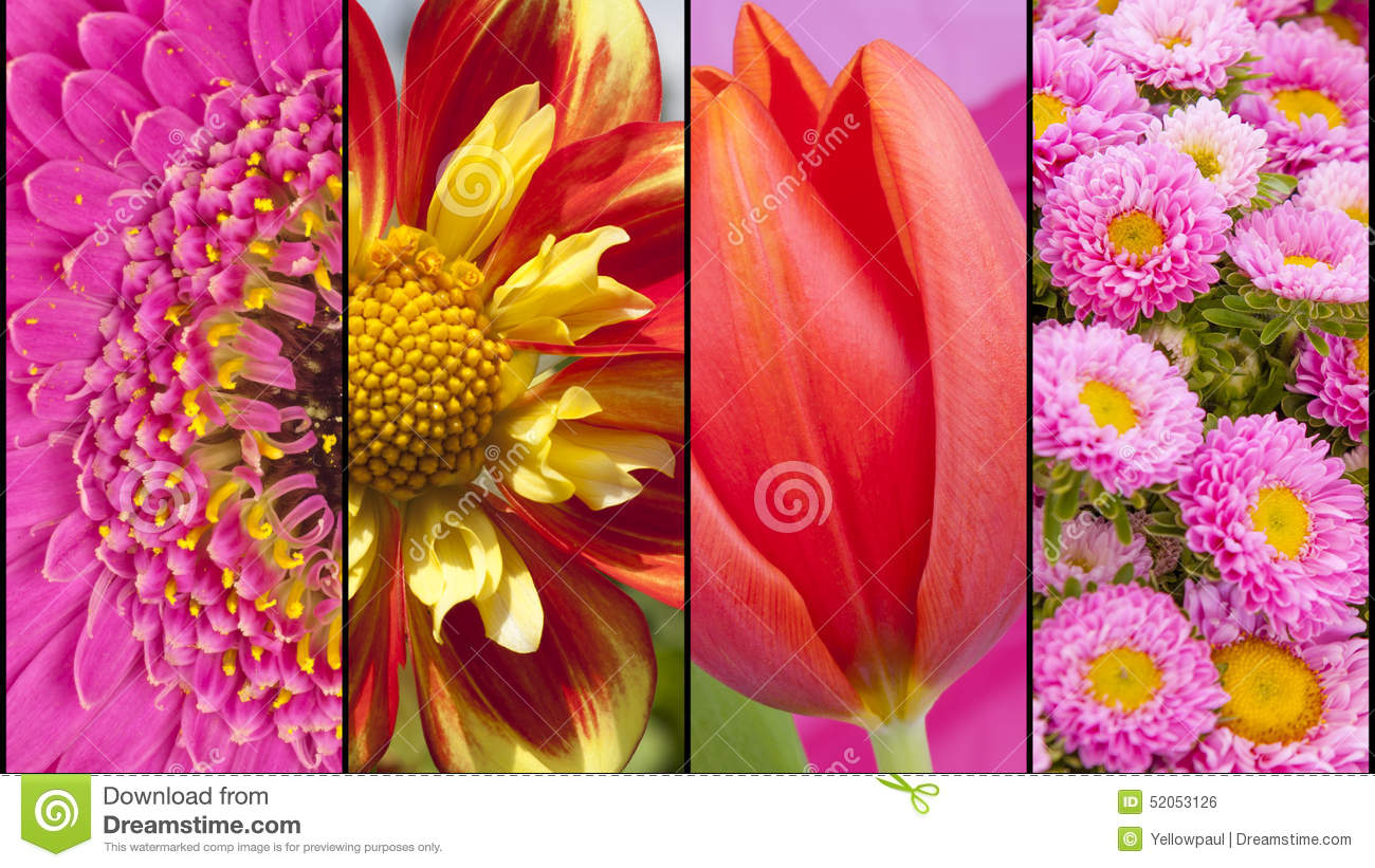 Collage Of Red Yellow And Pink Flowers Stock Photo Image Of Flower
