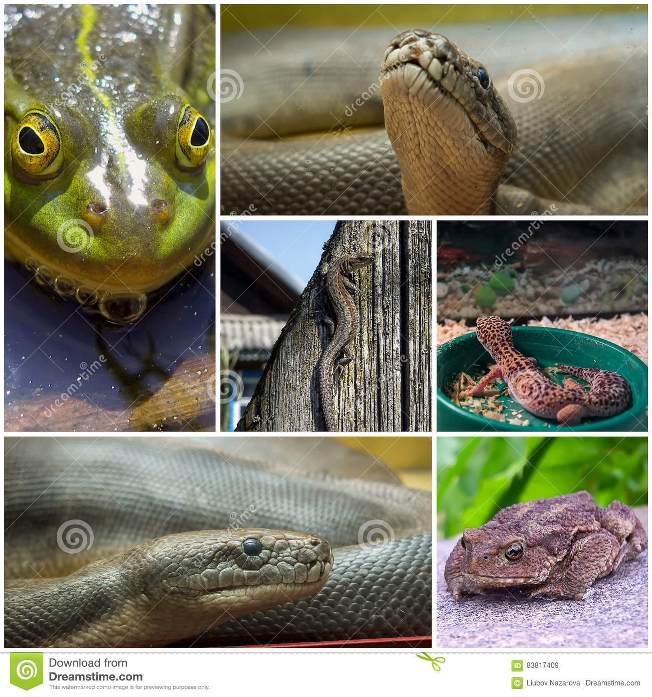 A 2 Z Reptiles Collage With Reptiles ...