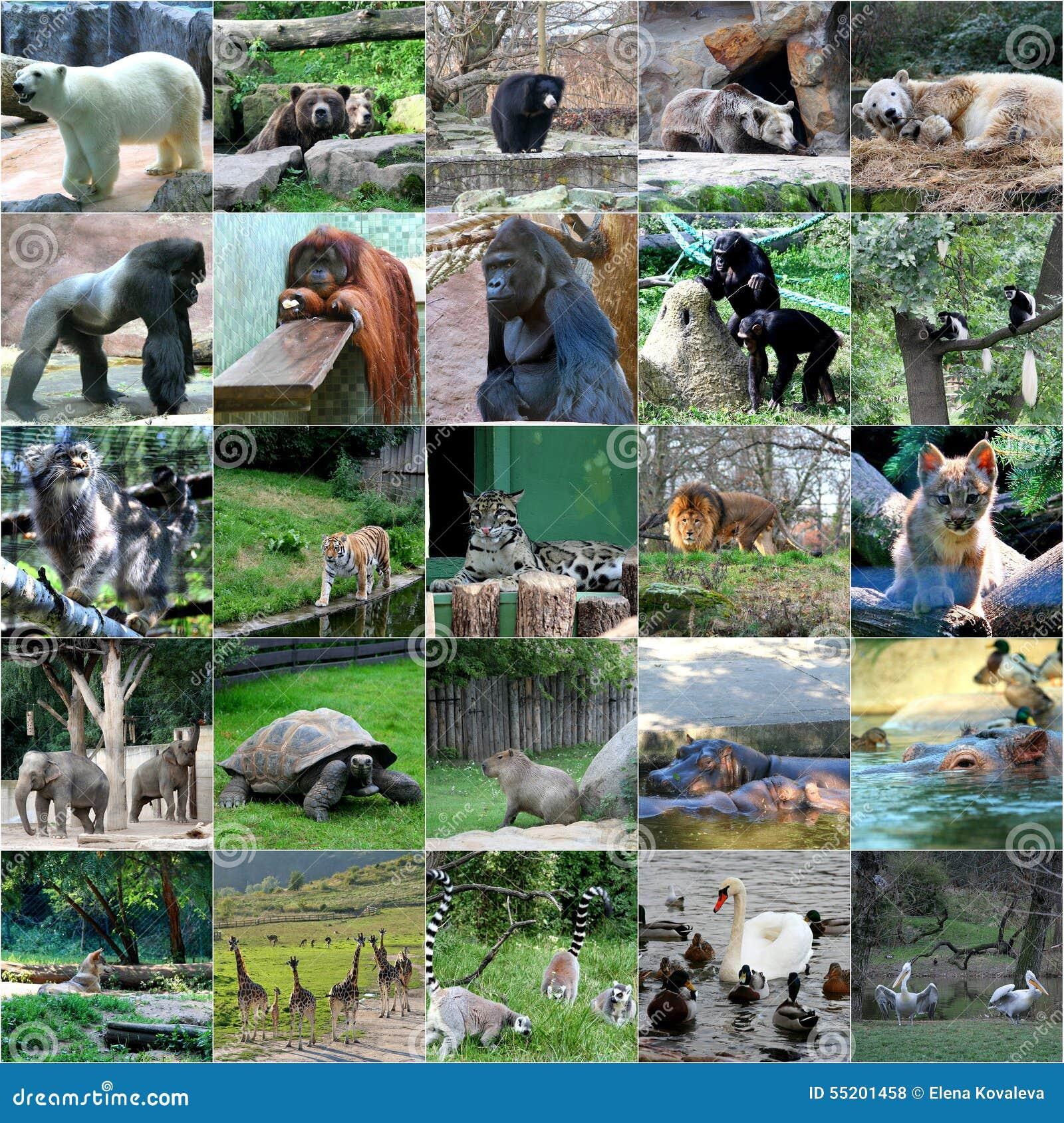 Collage Of Some Wild Animals Stock Photo Image 55201458
