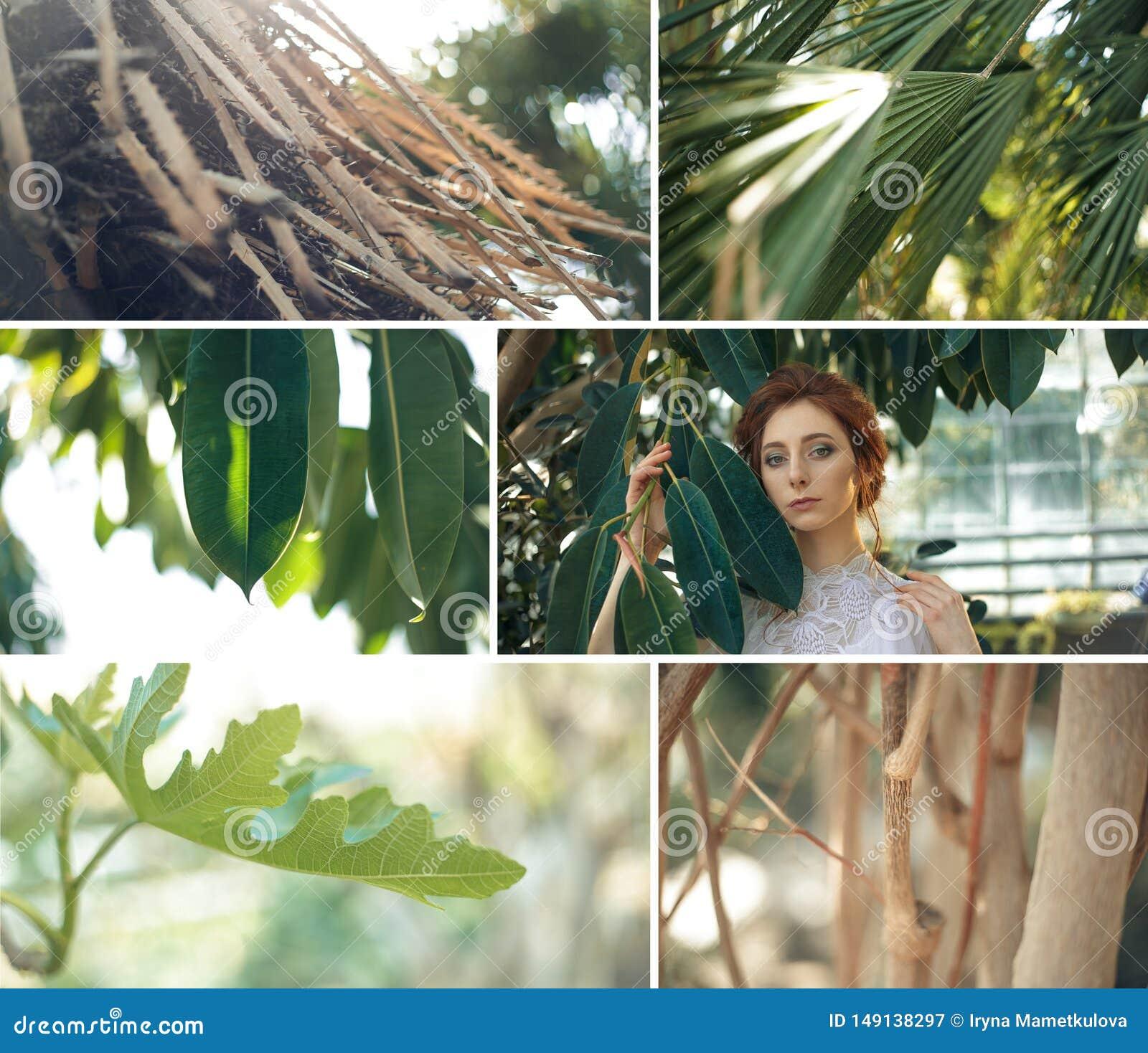 Collage tropical de las plantas de jard?n con la muchacha roja del pelo