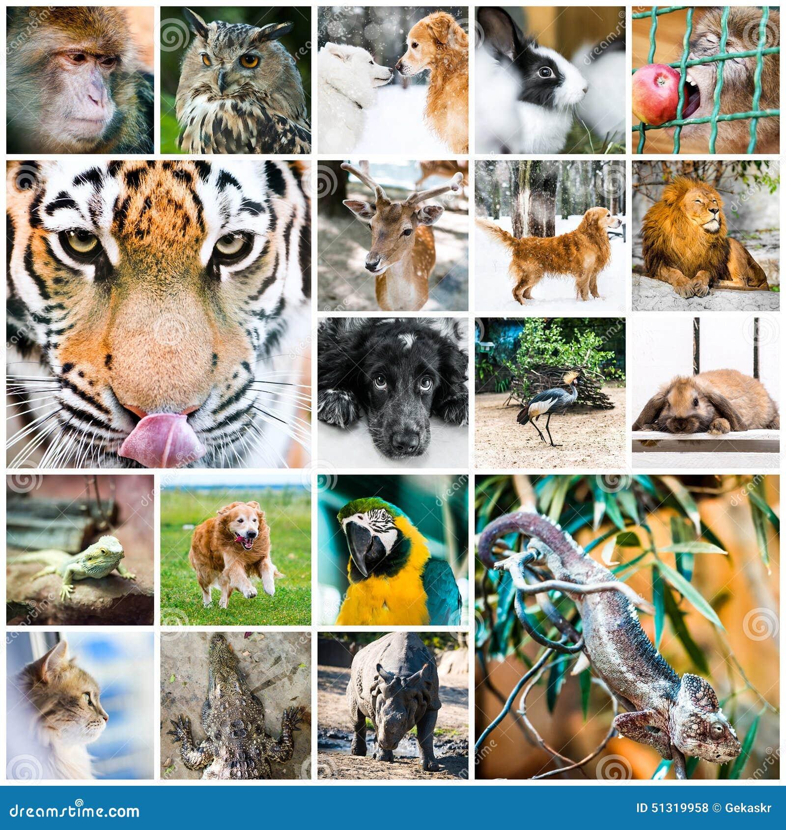 Afbeeldingsresultaat voor dieren collage