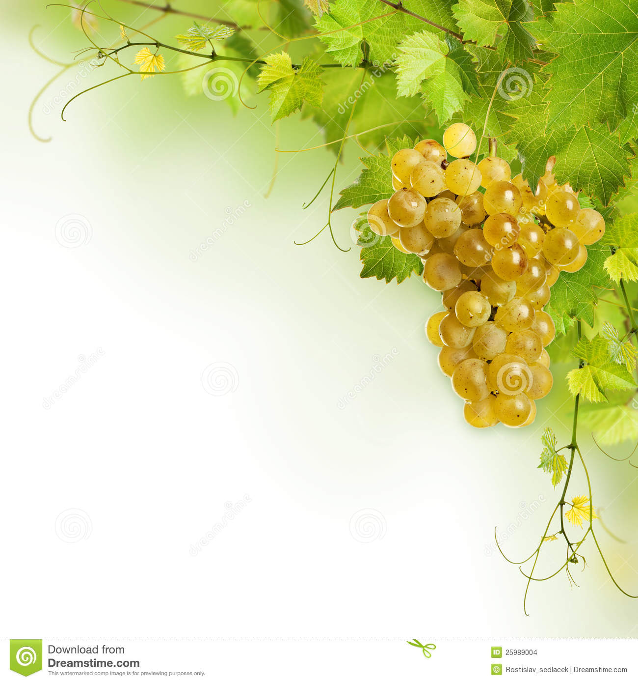 Botanical Print Wallpaper Collage Of Vine Leaves And Yellow Grape Stock Photo