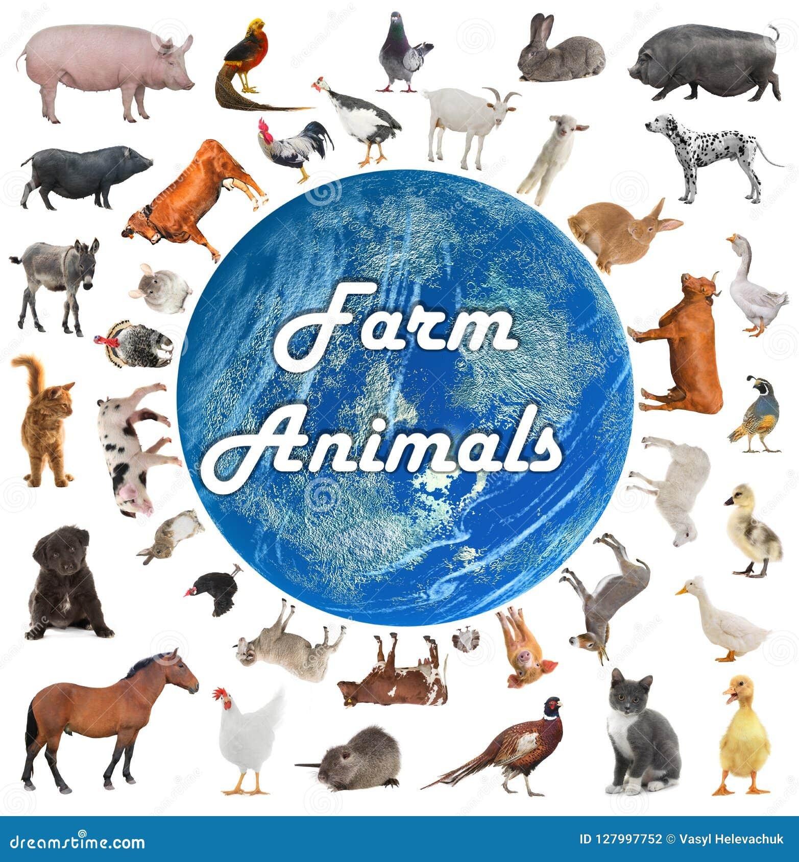 Collage von Vieh