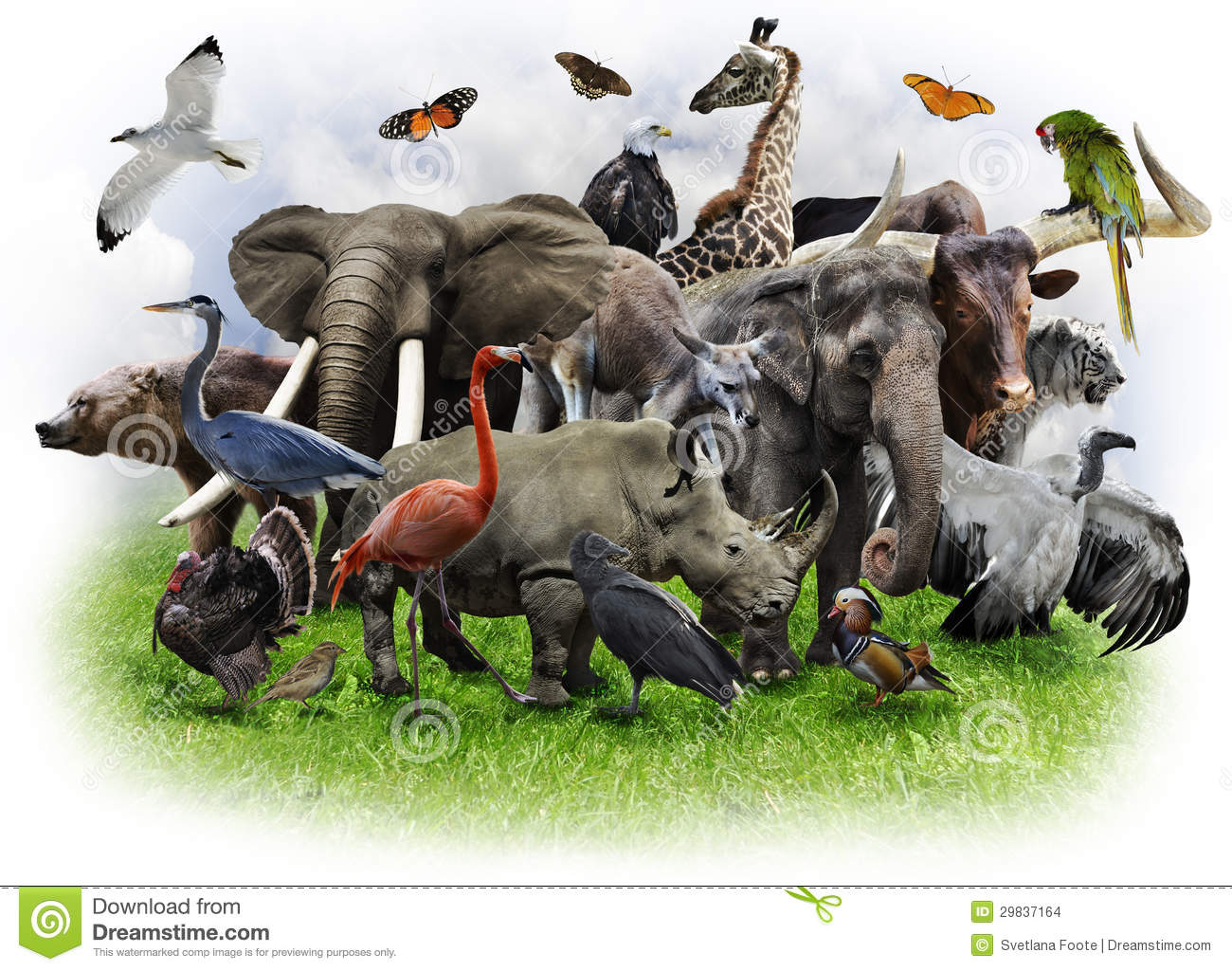 Group of wild animals together - photo#16