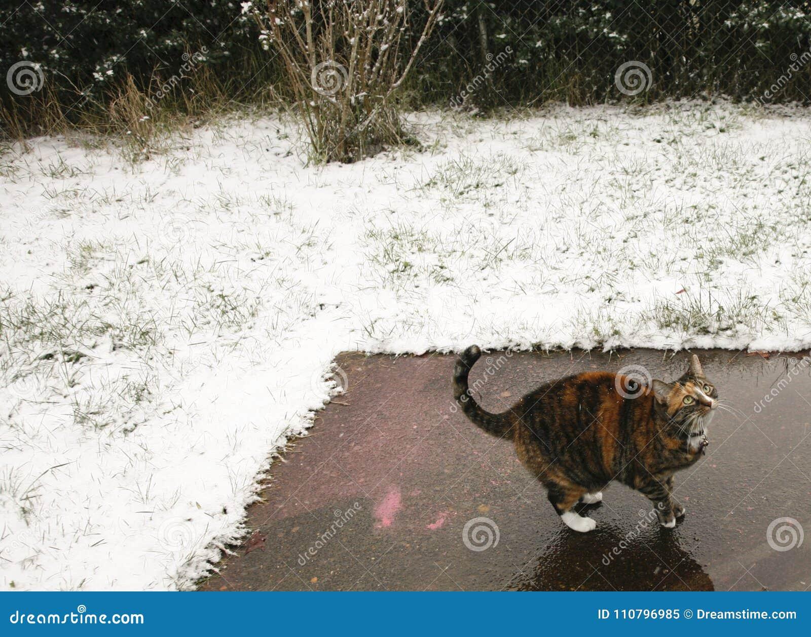 Collared Cat Looking Up in de Sneeuw