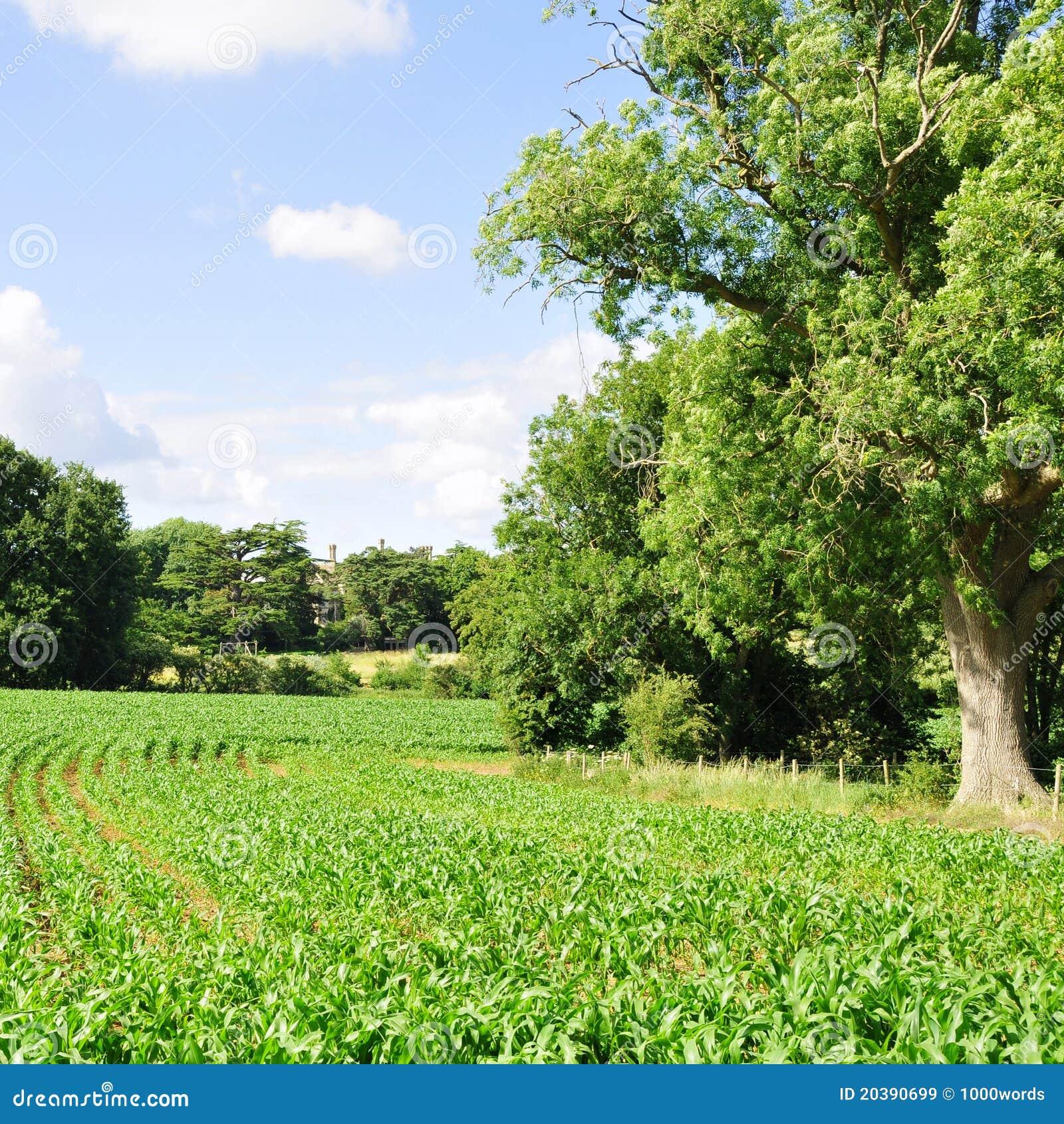 Collectes de terres cultivables
