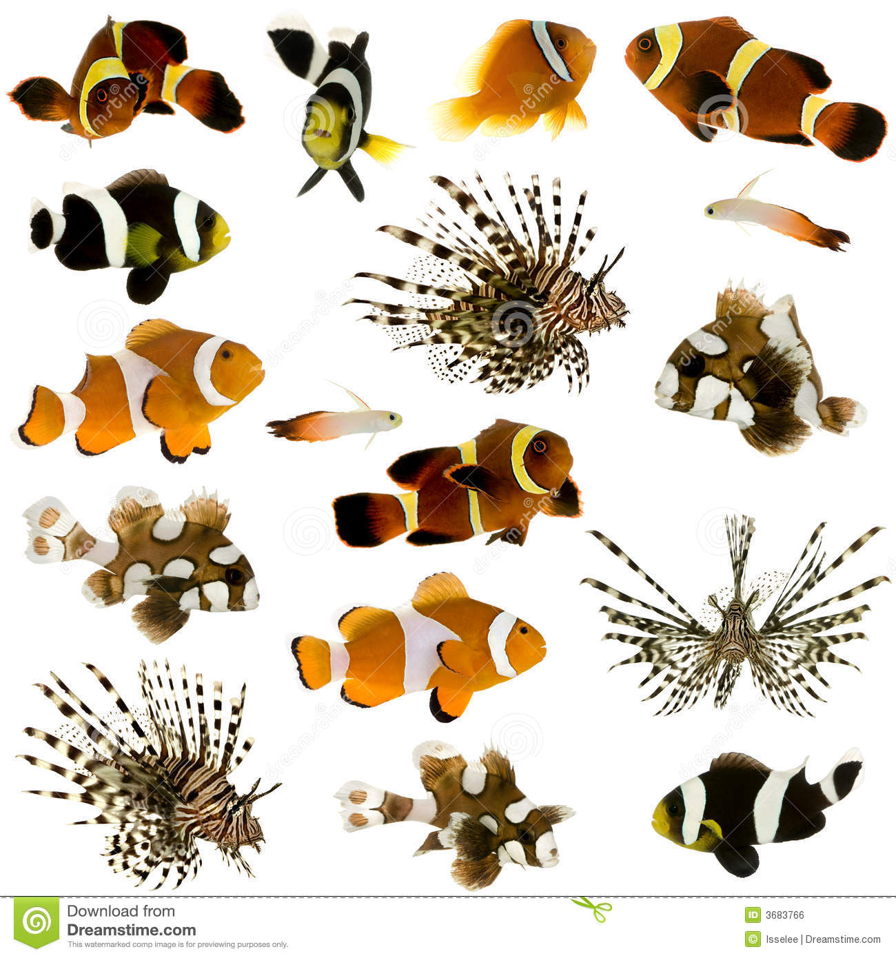 Collection of 17 tropical fish
