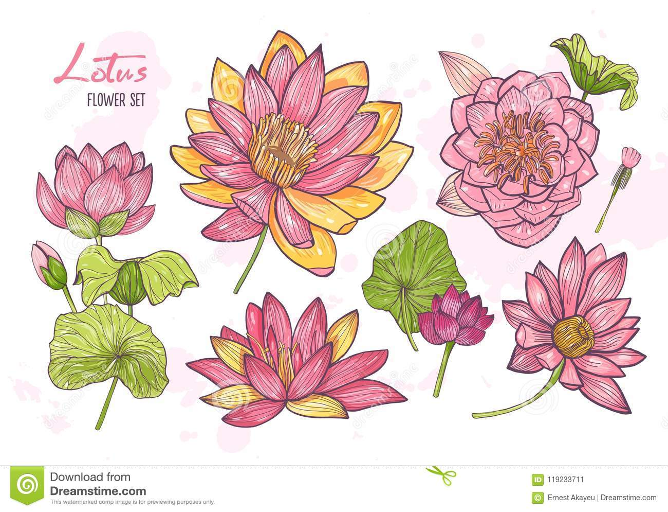 Collection Of Beautiful Detailed Botanical Drawings Of Blooming