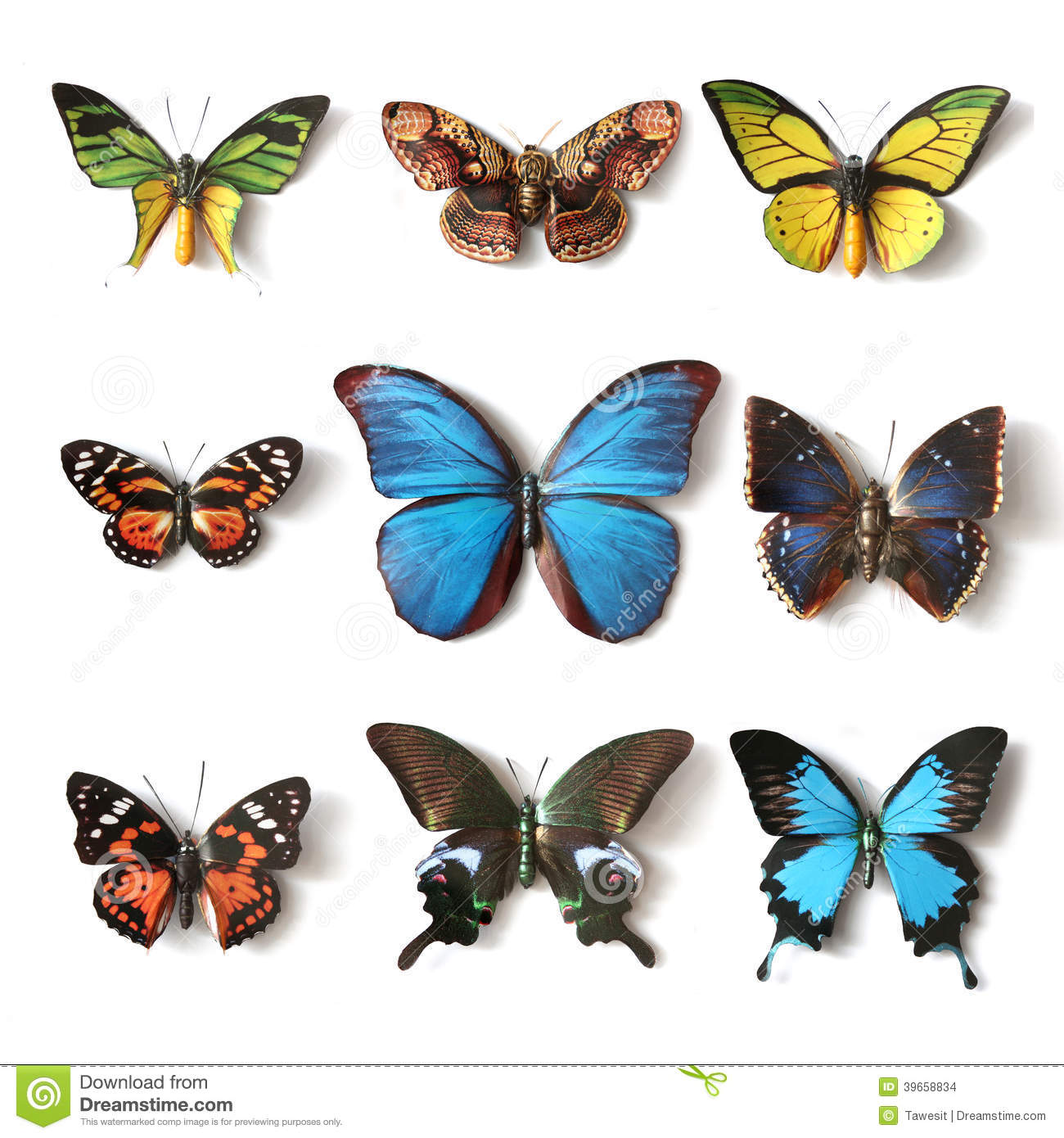 Collection bourr e de papillon d 39 insectes photo stock - Images de papillons gratuites ...