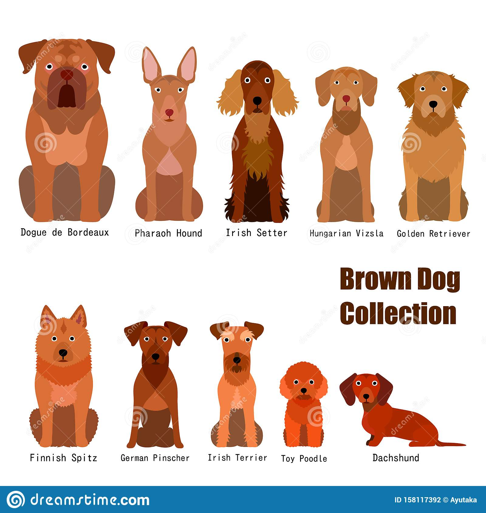 Collection Of Brown Dog Stock Vector Illustration Of German