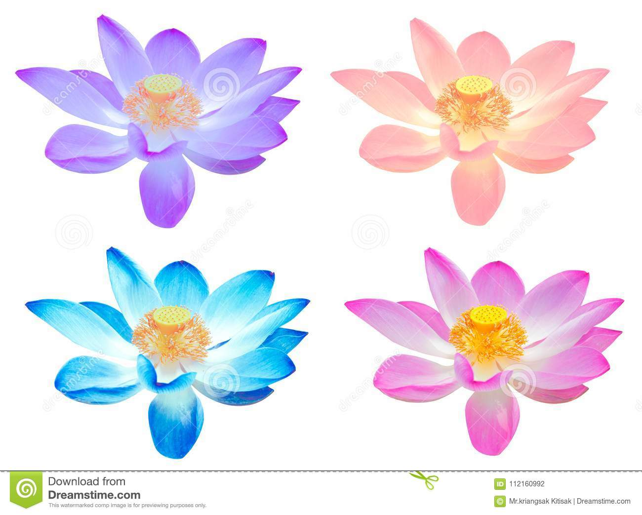 Collection colorful lotus flower for decorate isolated stock photo collection colorful lotus flower for decorate isolated mightylinksfo