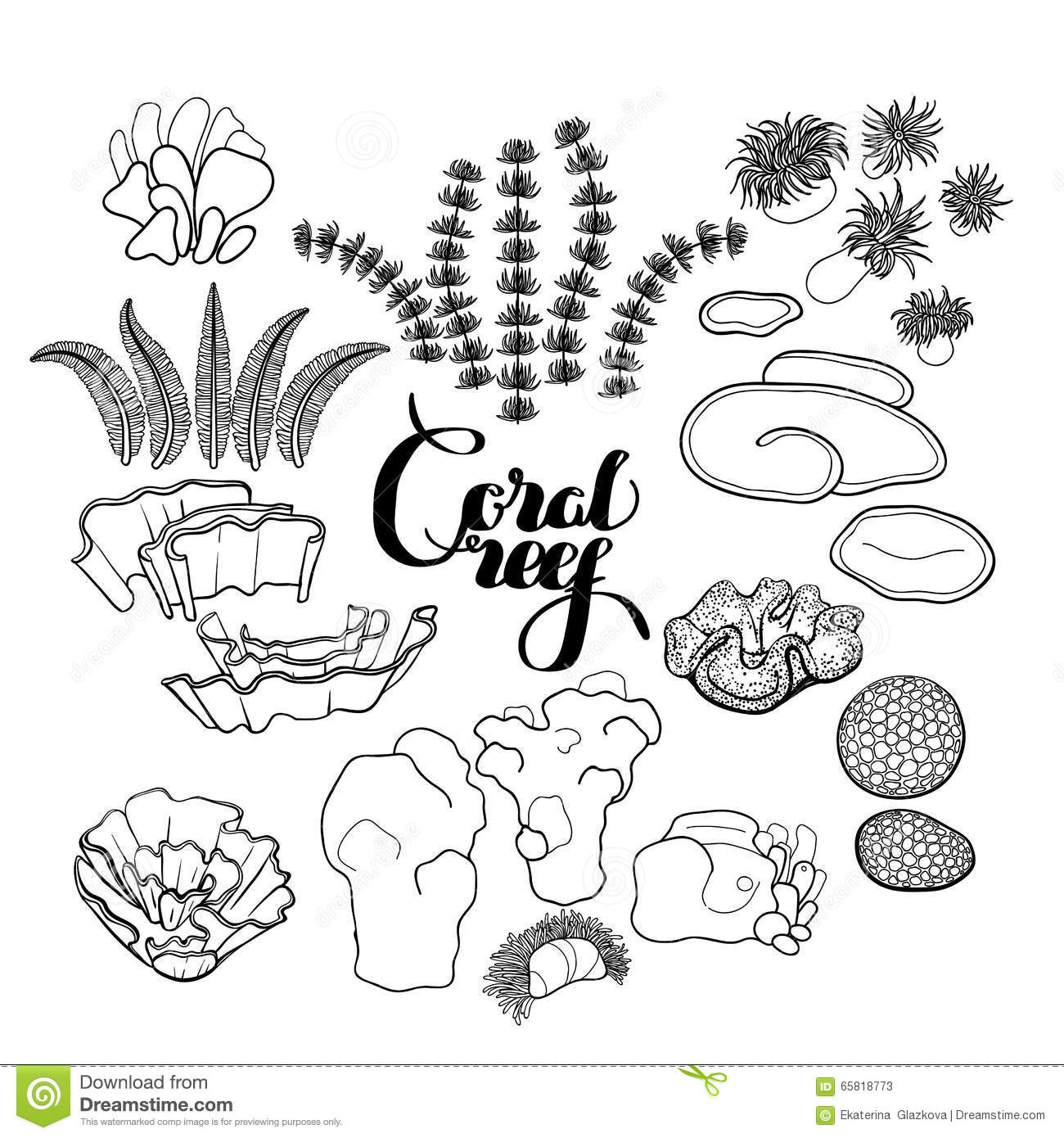 Collection Of Coral Reef Elements Stock Vector - Illustration of ...