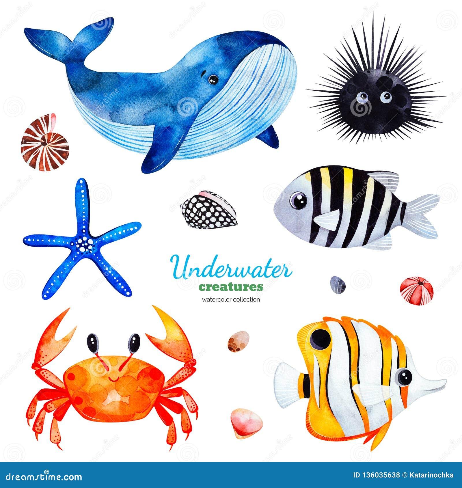 Collection d aquarelle avec les poissons de corail multicolores coquilles, crabe, baleine, étoile de mer, garnement