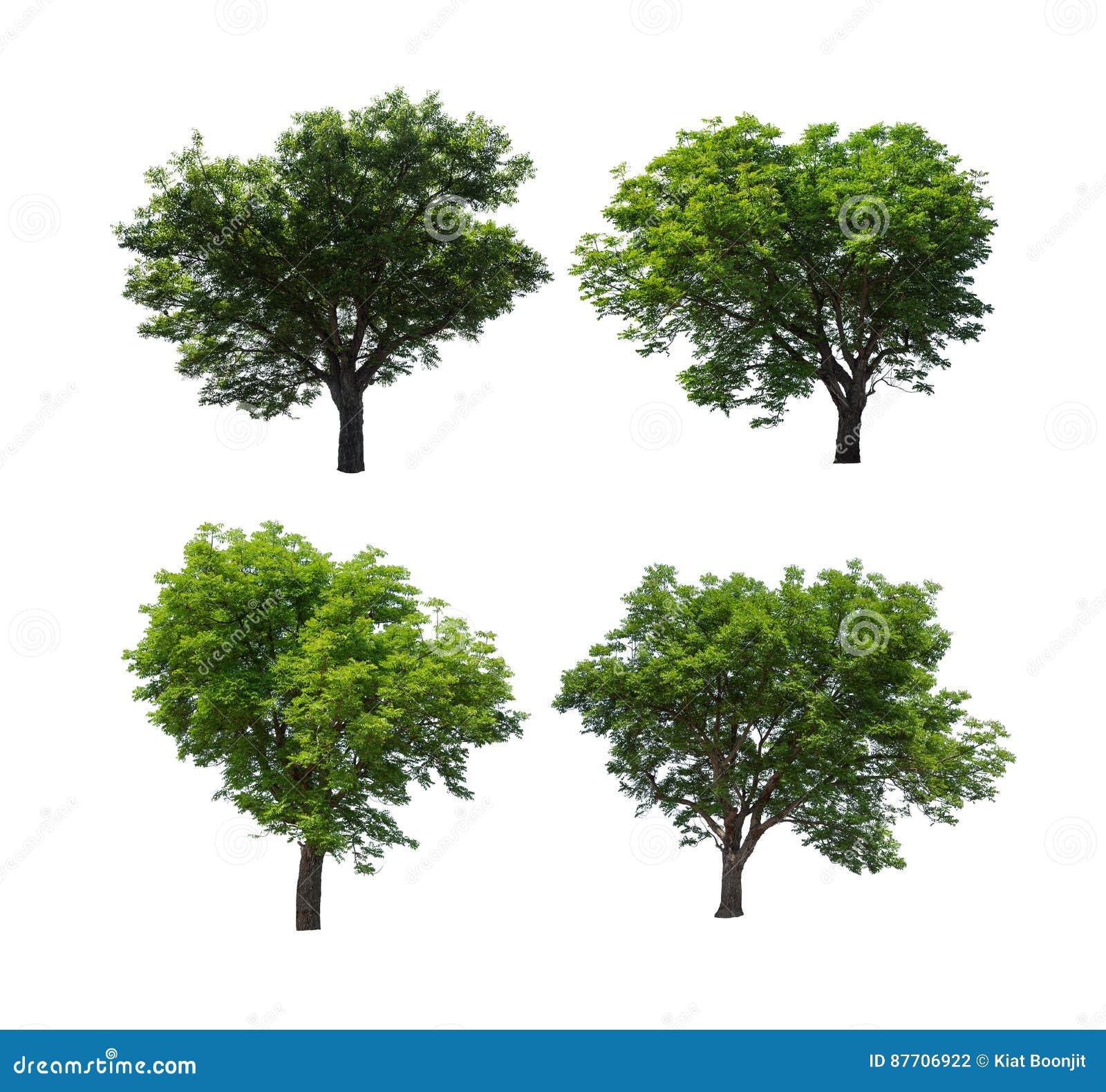 Collection d arbre d isolement sur le fond blanc