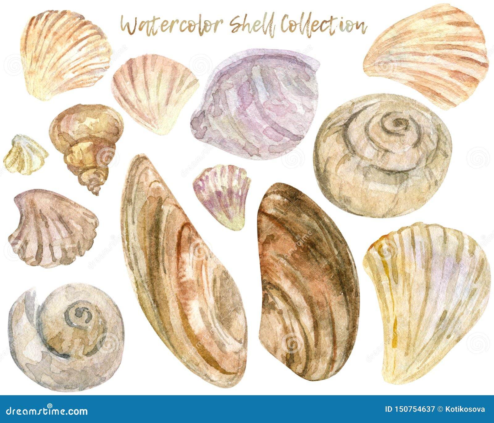 Collection de clipart (images graphiques) de coquille d aquarelle