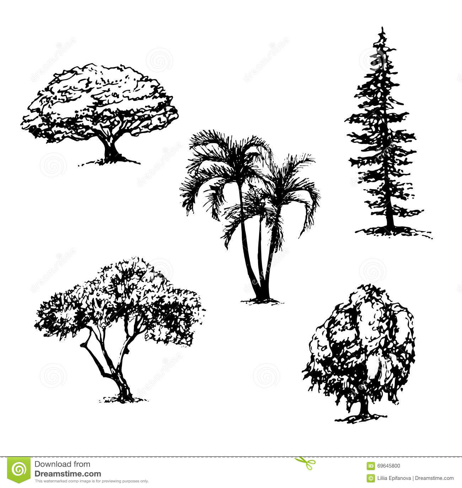 Collection de dessin d 39 illustration de croquis de 5 arbres - Croquis arbre ...