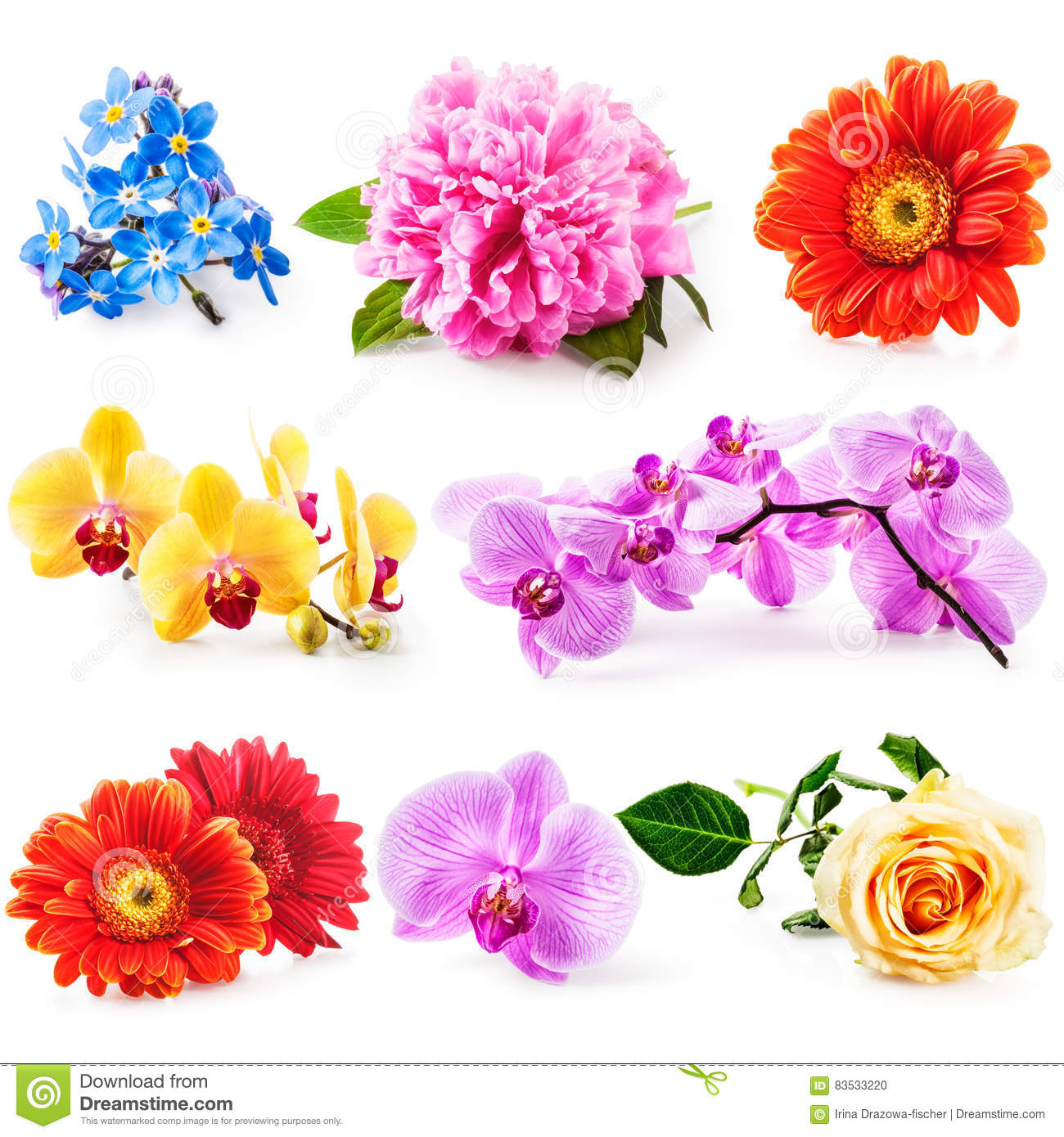 Collection de fleur