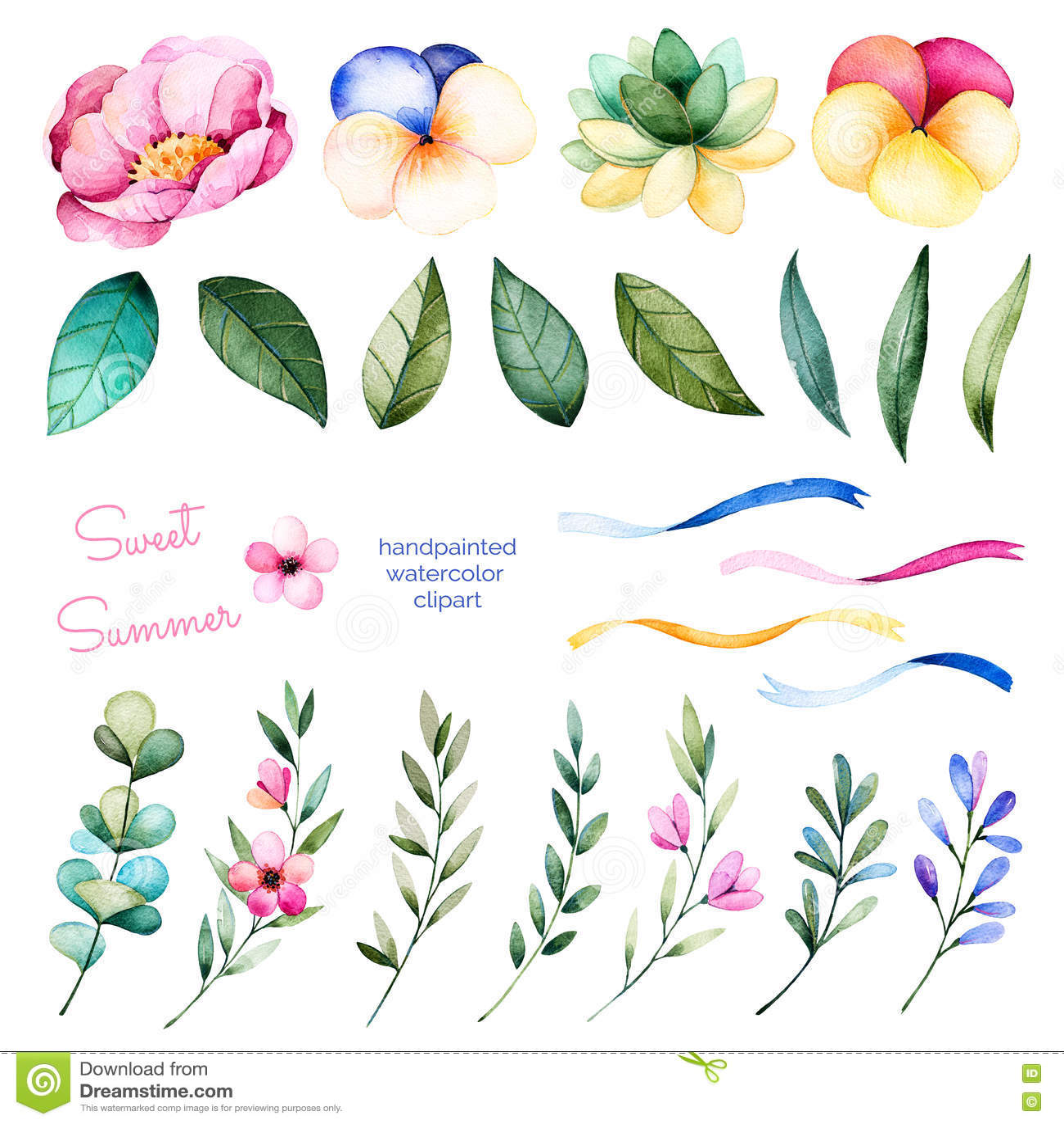 Collection de Foral avec les fleurs, la pivoine, les feuilles, les branches, la plante succulente, les fleurs de pensée, les ruba