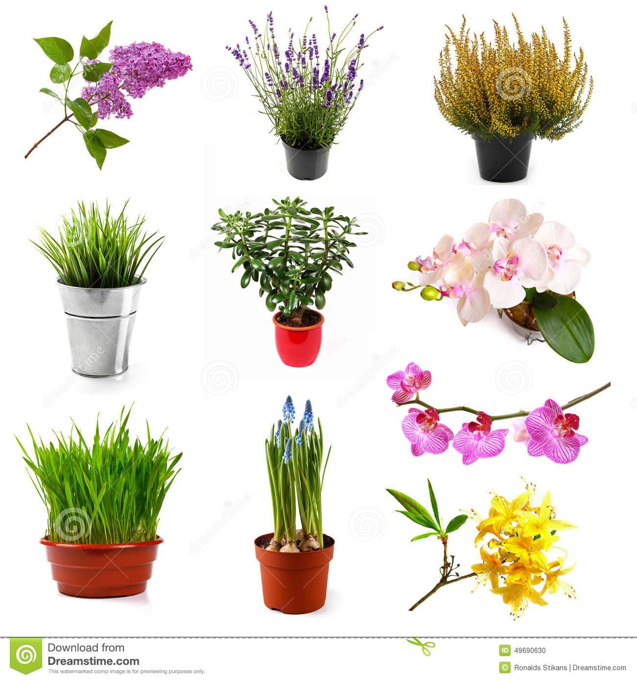 Collection With Different Flowers And Plants Isolated On White