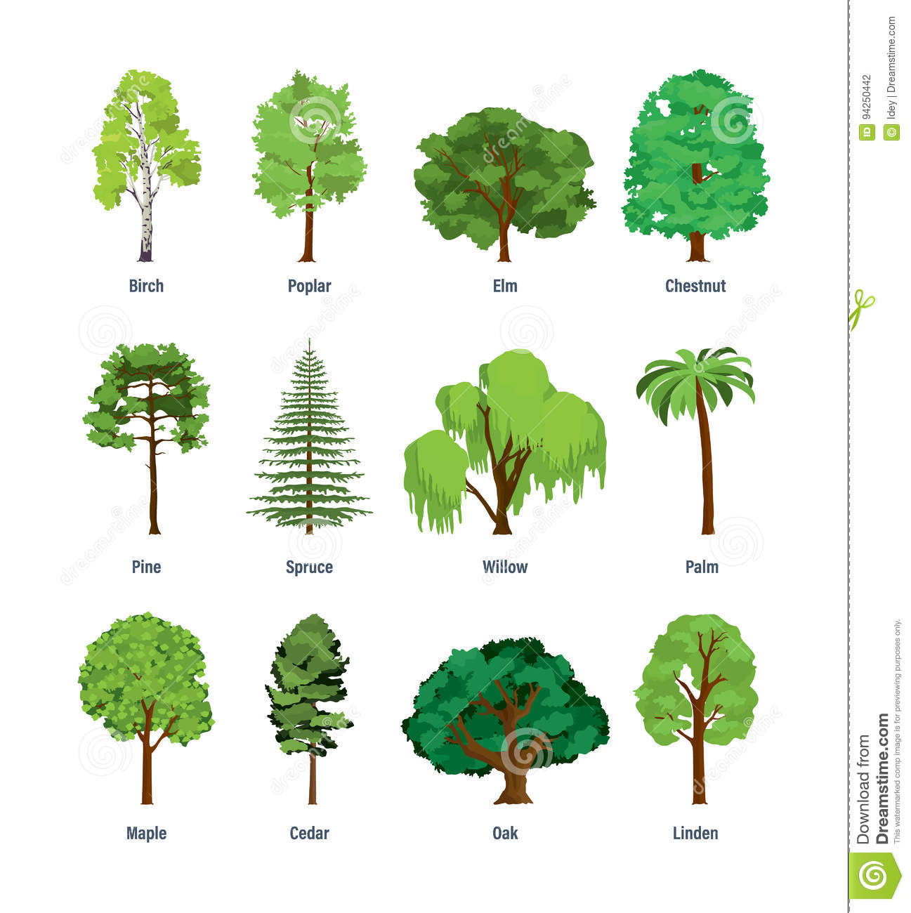 Collection of different kinds of trees stock vector for Arboles de jardin de hoja perenne